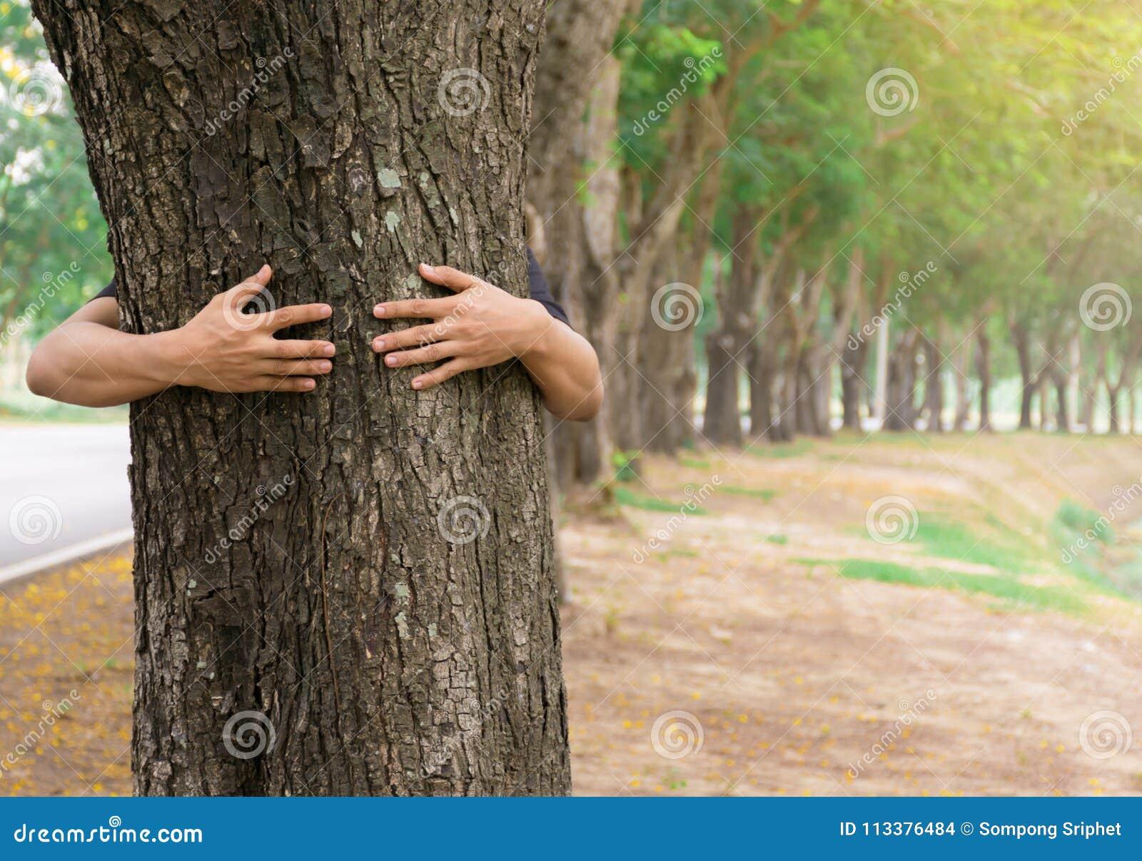 Alberi forestali di amore dell albero dell abbraccio dell uomo della mano di concetto di ecologia