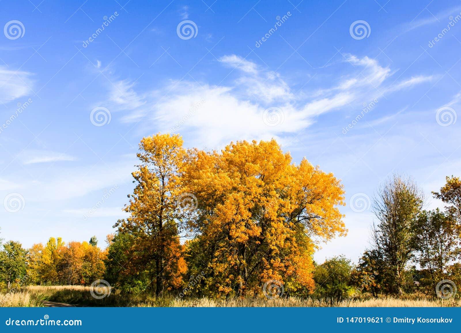 Alberi gialli contro cielo blu