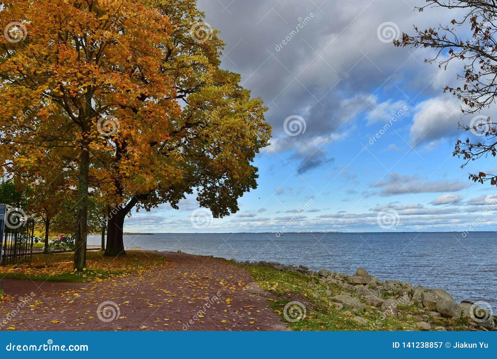 Alberi gialli e rossi delle foglie dal mare