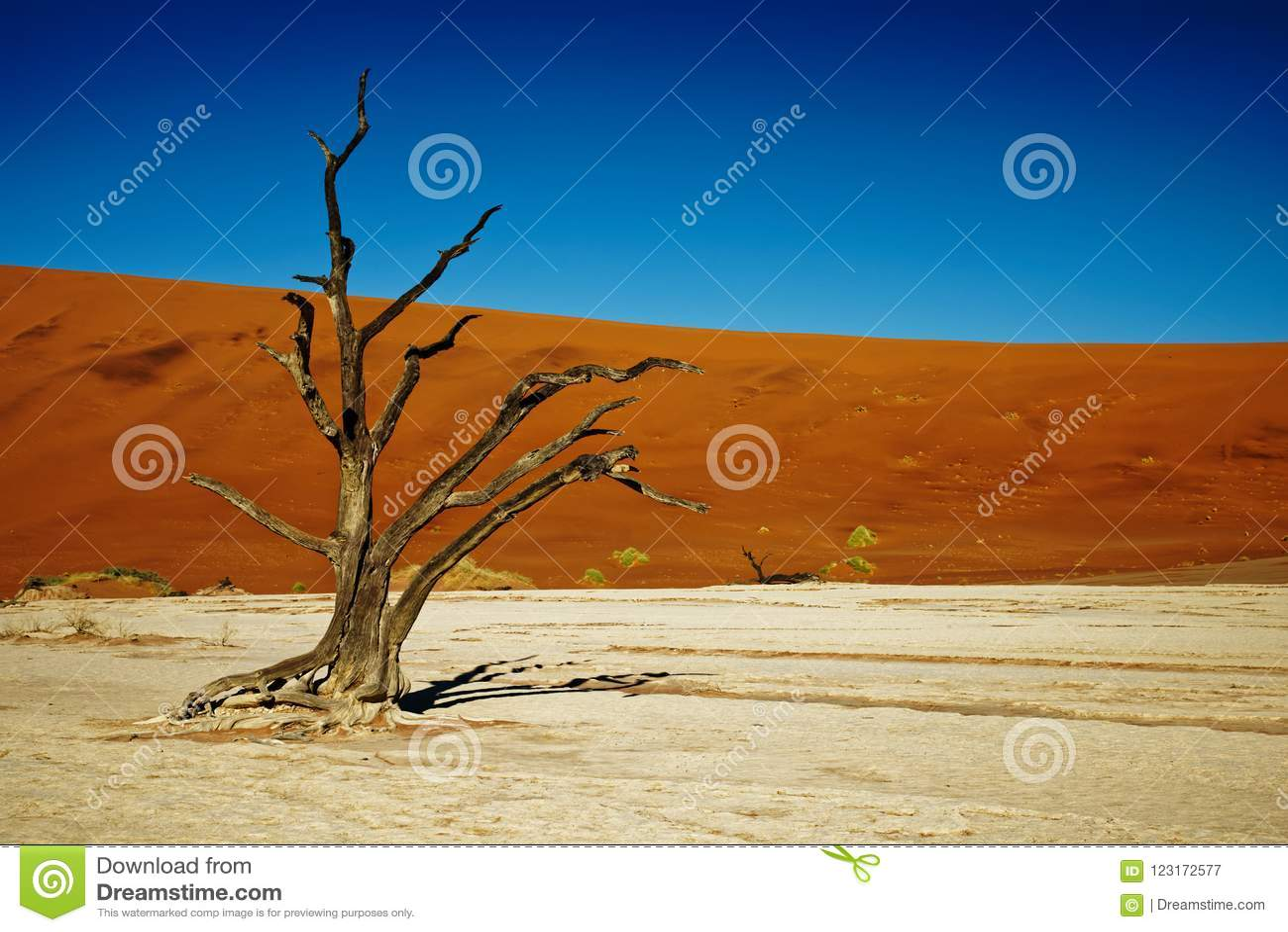 Alberi morti di Deadvlei Namibia, fine su di un albero