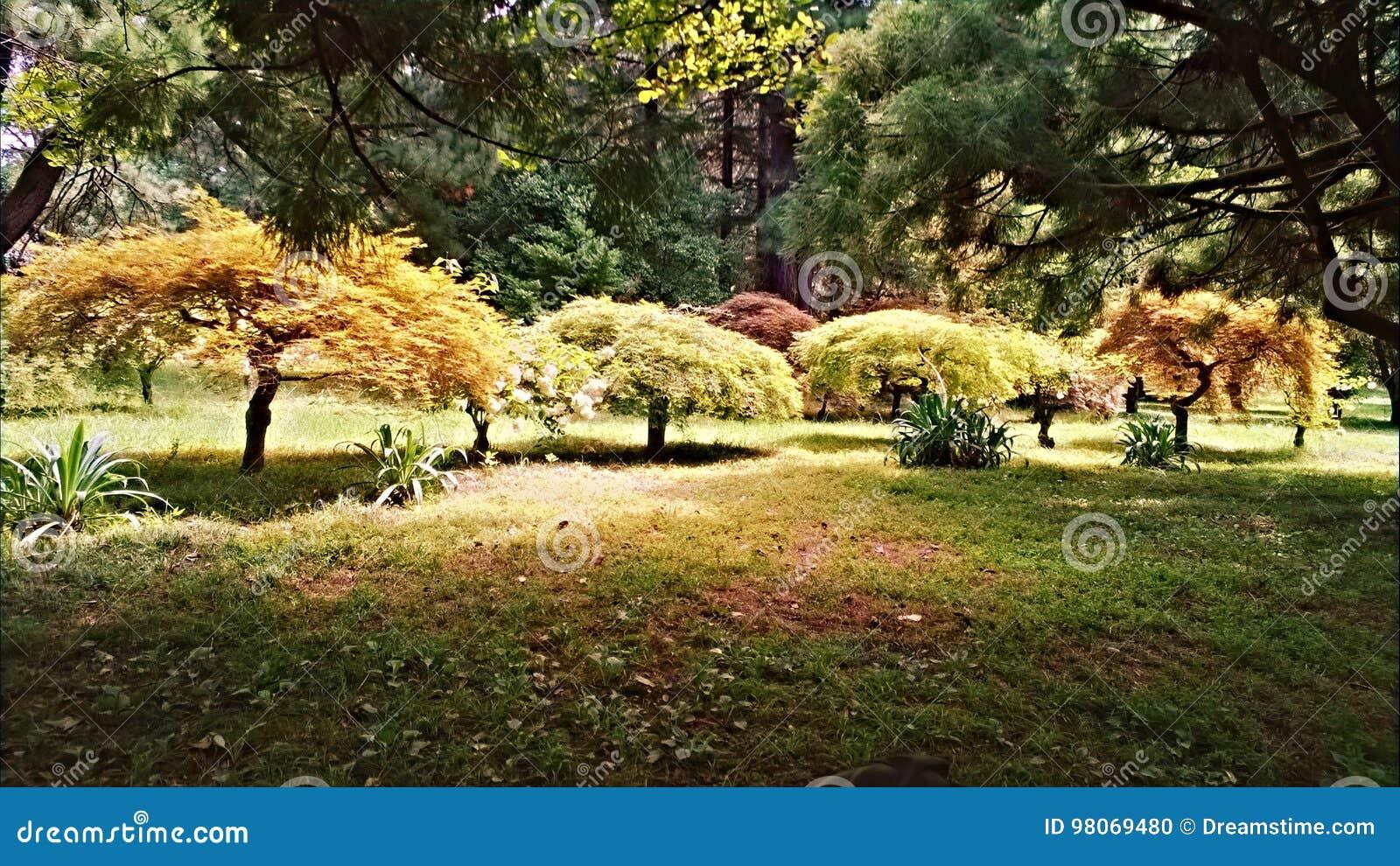 Alberi Nani Da Giardino alberi nani fotografia stock. immagine di albero, alberi