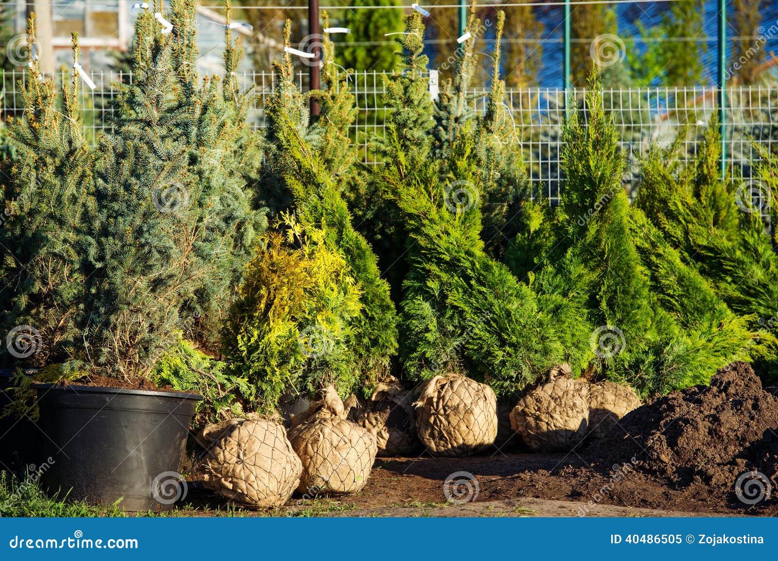 Alberi nel giardino sempreverde della scuola materna immagine stock immagine di erbe fresco - Prezzi alberi da giardino ...