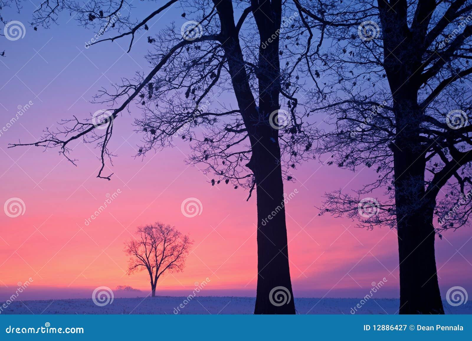Alberi nudi di inverno all alba