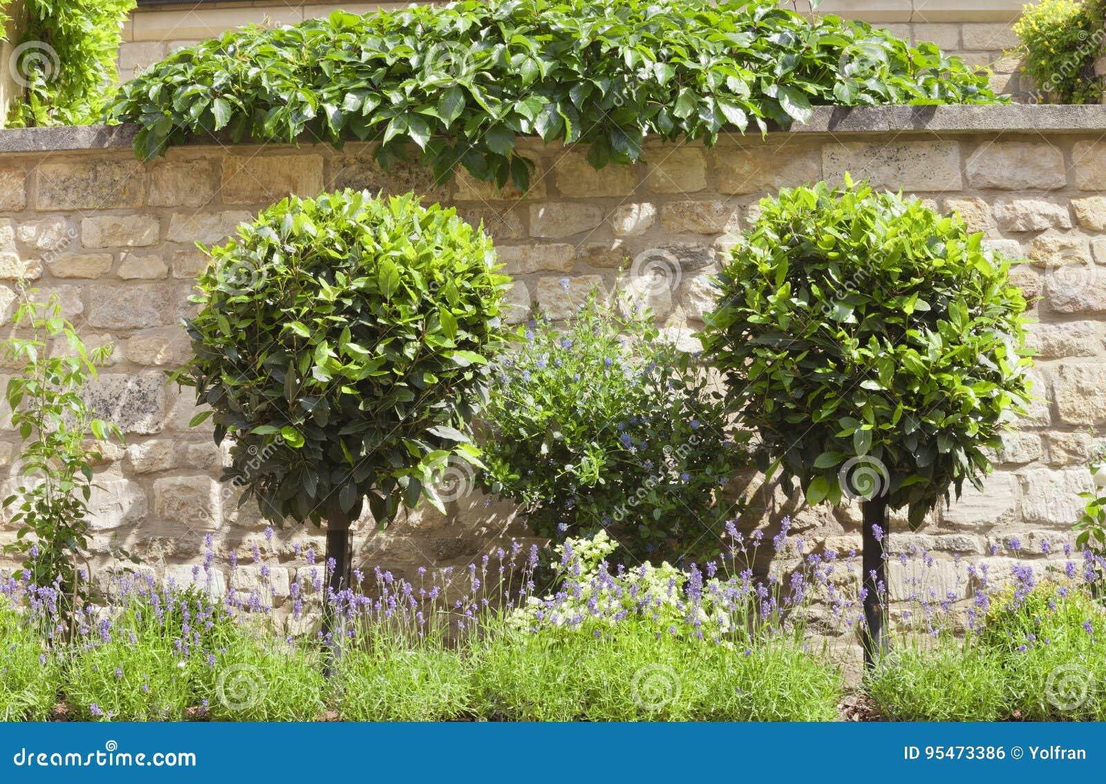 Alberi da giardino piccolo top with alberi da giardino - Alberi giardino piccolo ...
