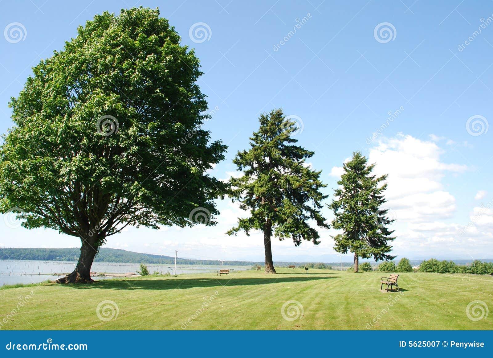 Alberi robusti immagine stock immagine di sviluppo for Alberi da frutto prezzi