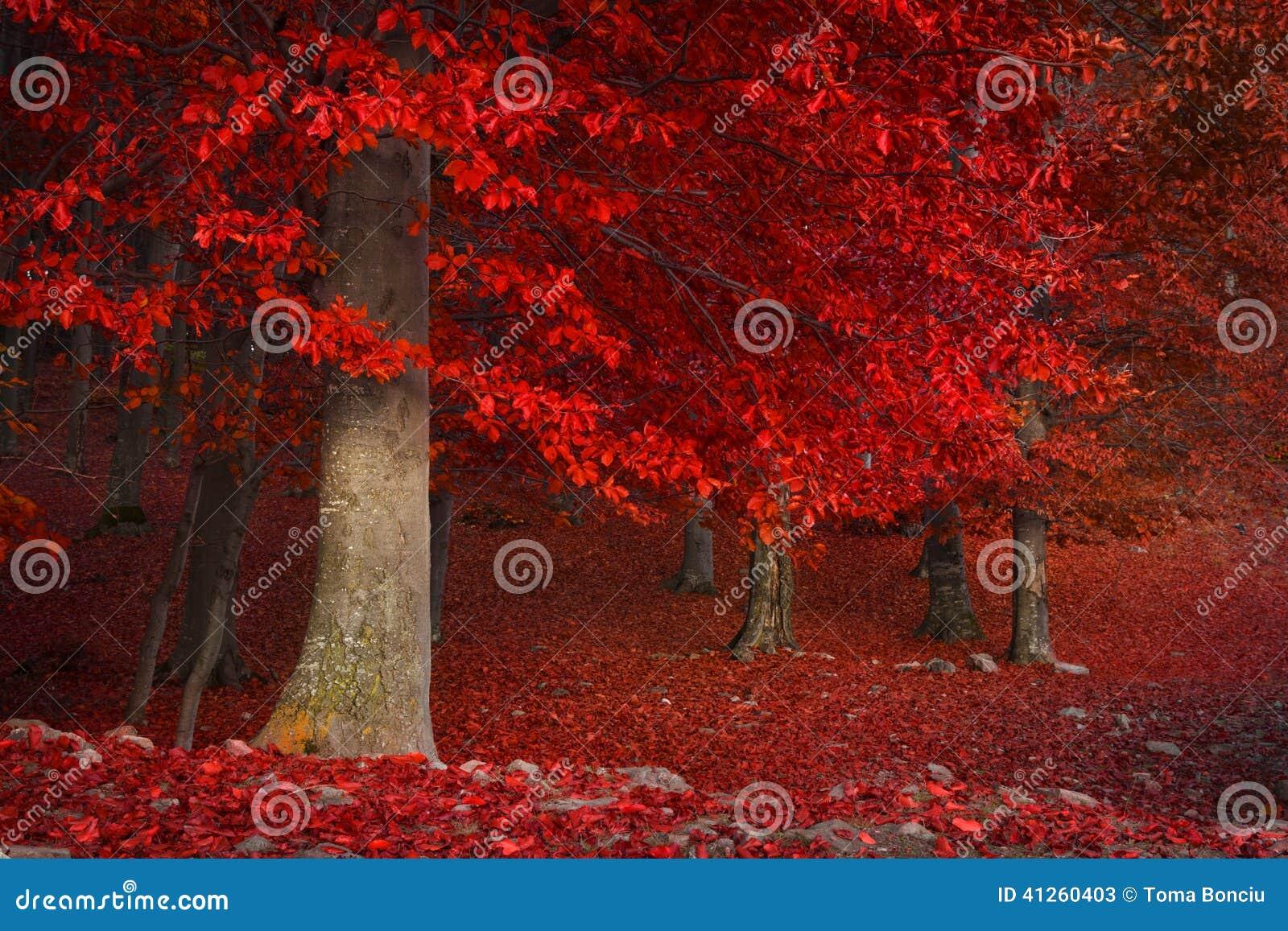 Alberi rossi nella foresta