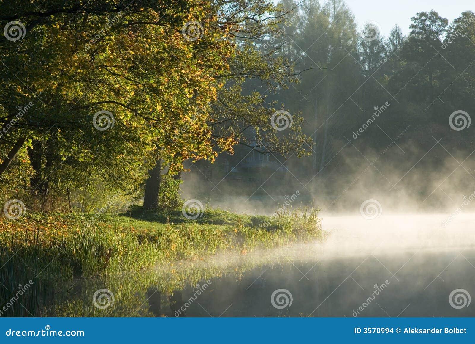 Alberi sopra acqua nebbiosa calma
