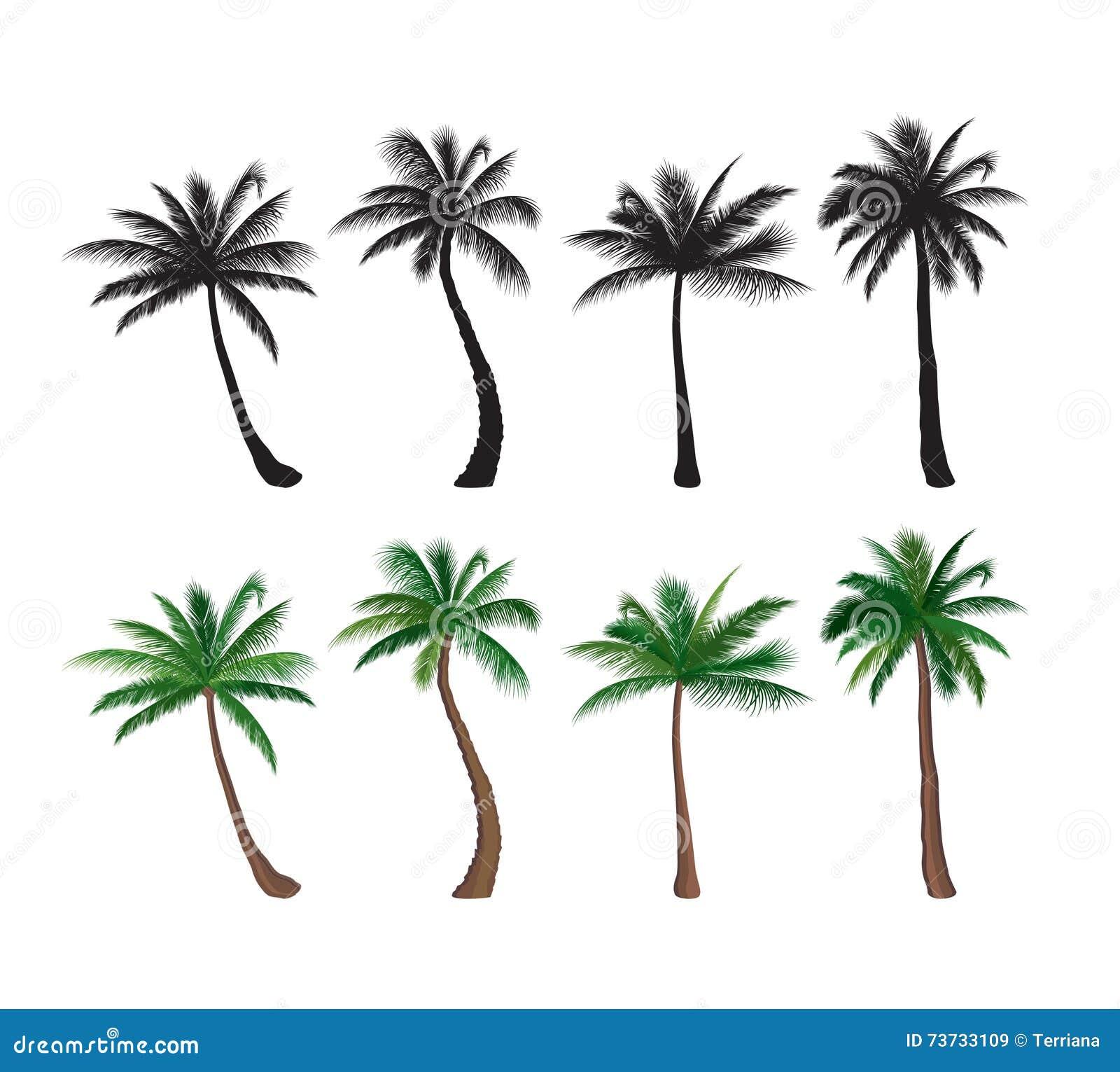 Alberi stabiliti della pianta tropicale degli elementi di for Palma pianta