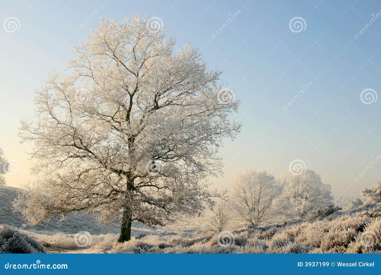 Alberi in un paesaggio invernale pieno di sole immagine for Disegni paesaggio invernale