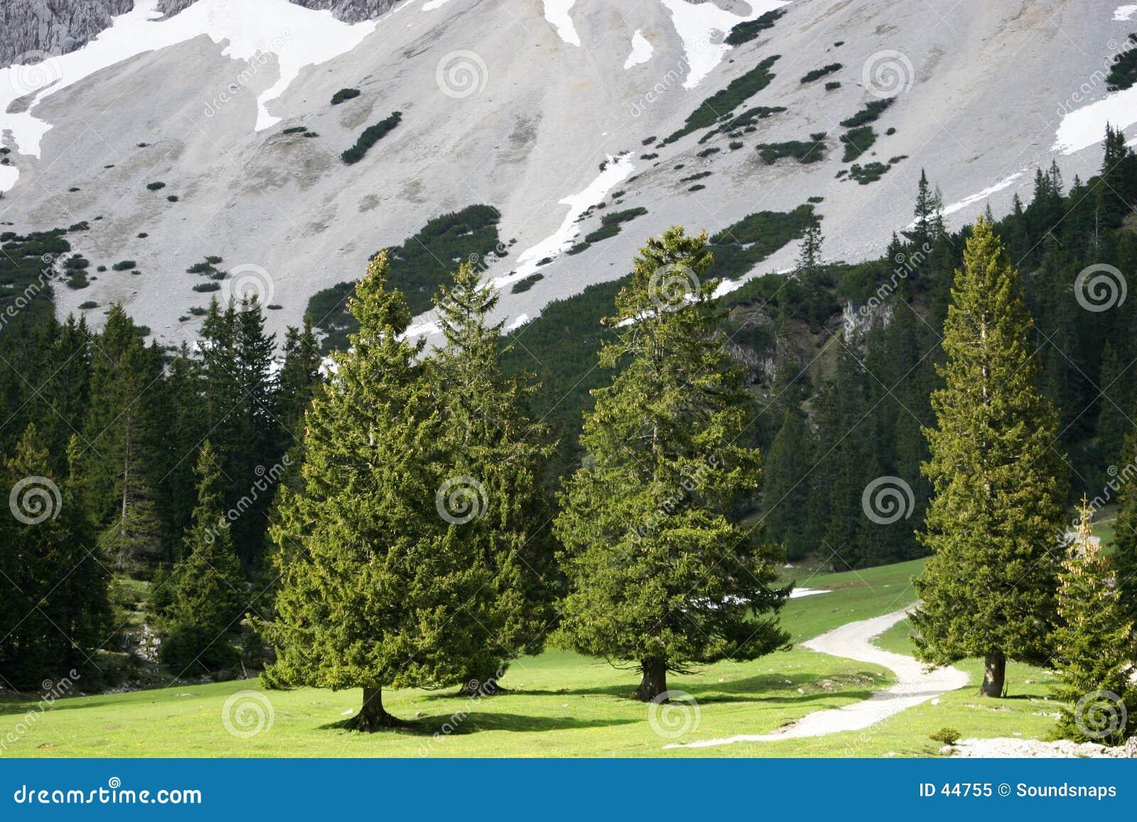 Alberi in valle alpina