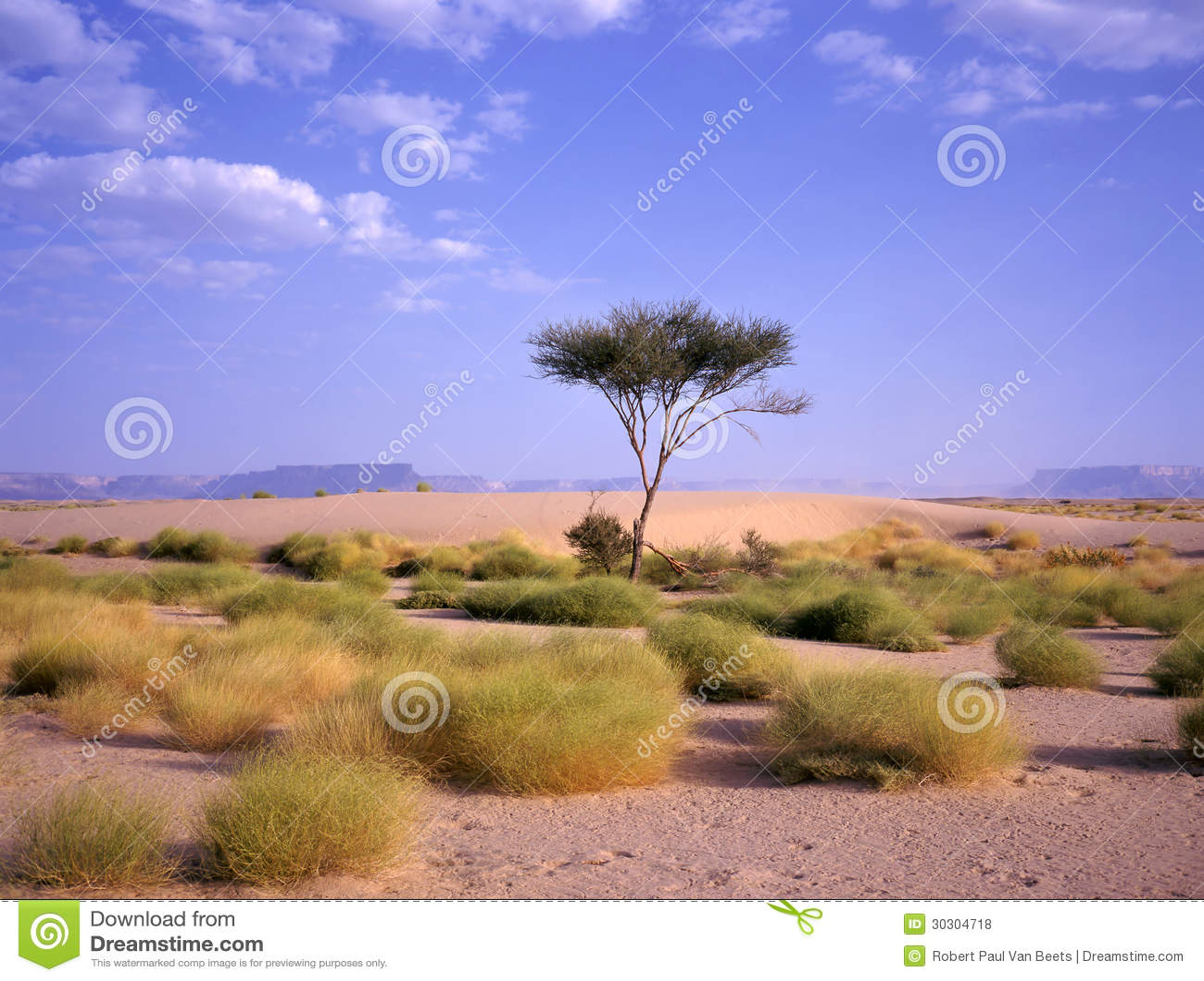 Albero Ad Un'oasi Al Deserto Arabo Fotografie Stock Libere da Diritti ...