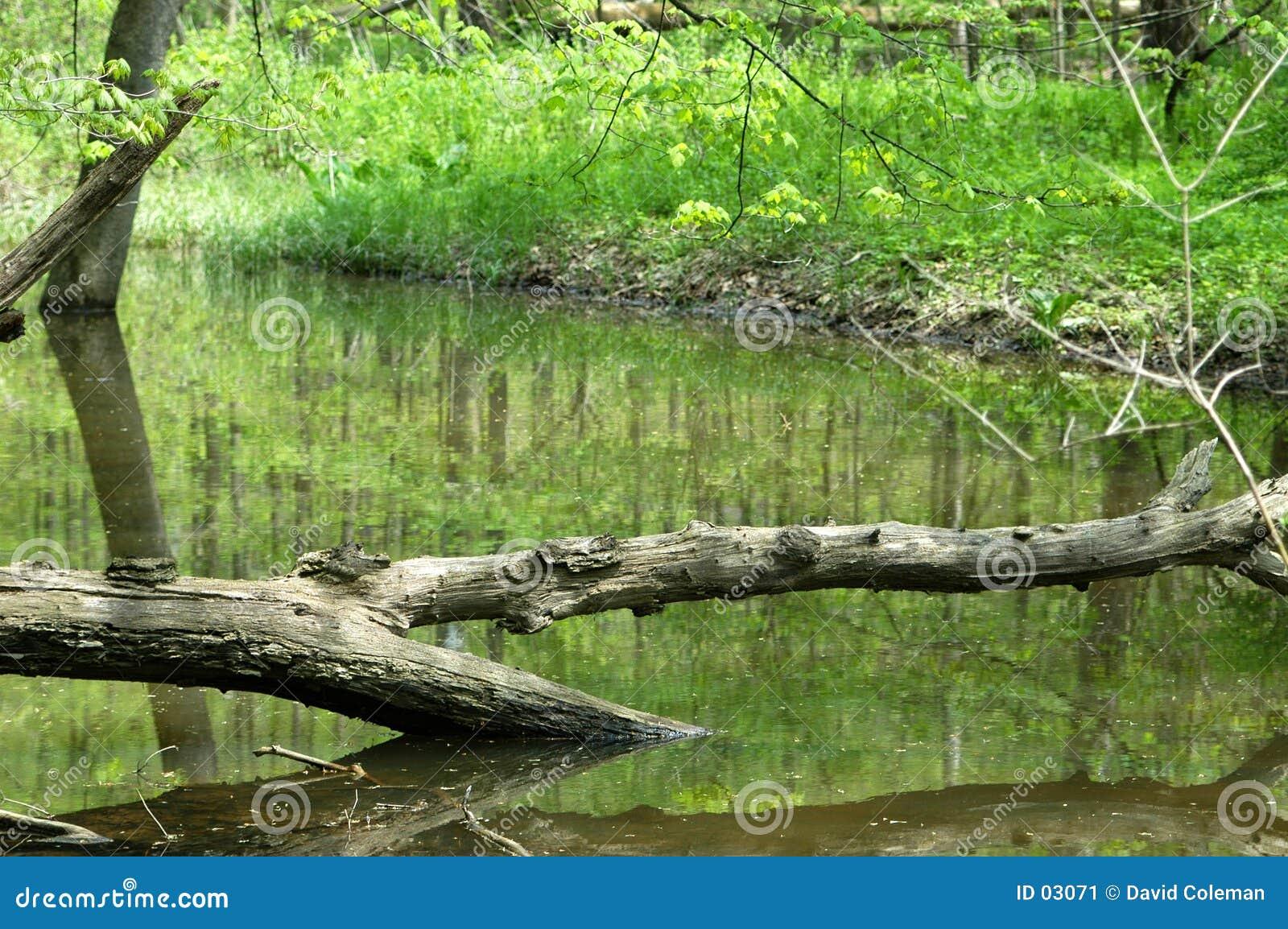 Albero attraverso acqua