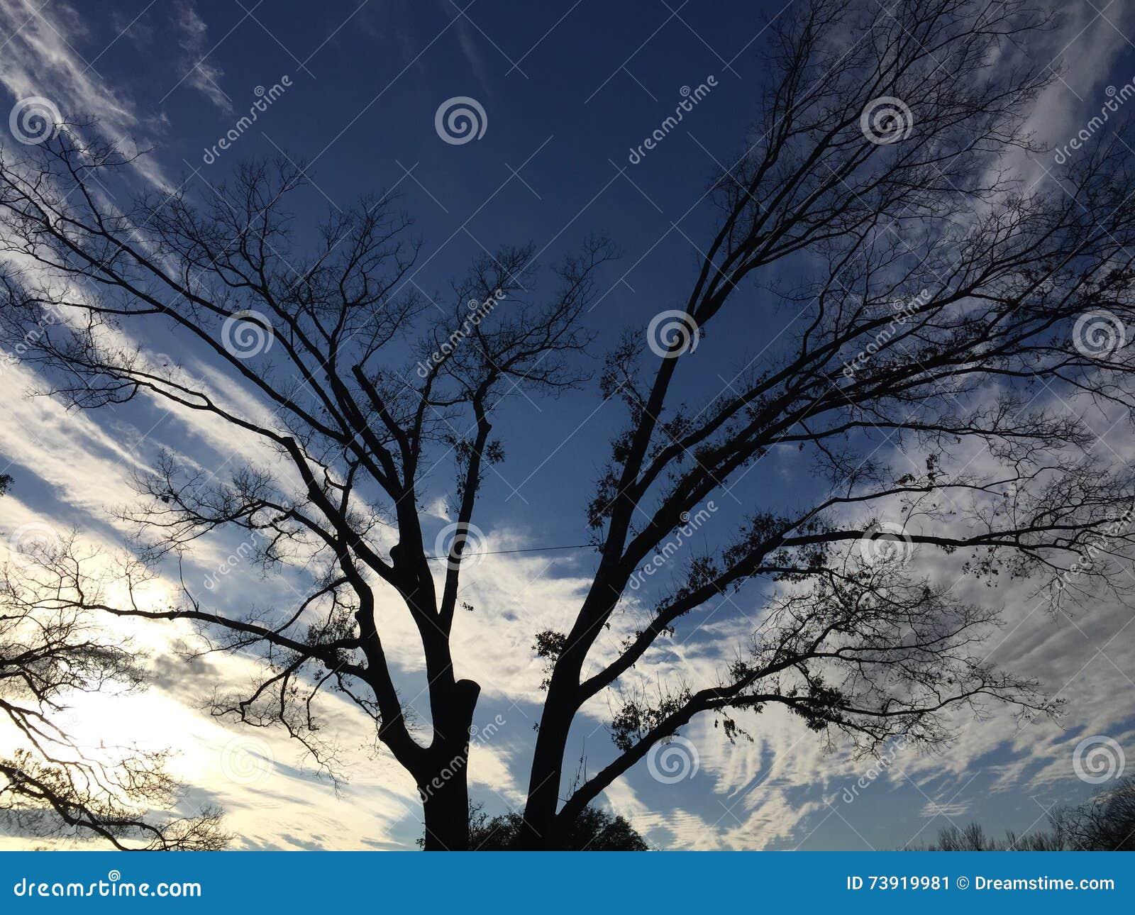 Albero che dipinge il cielo