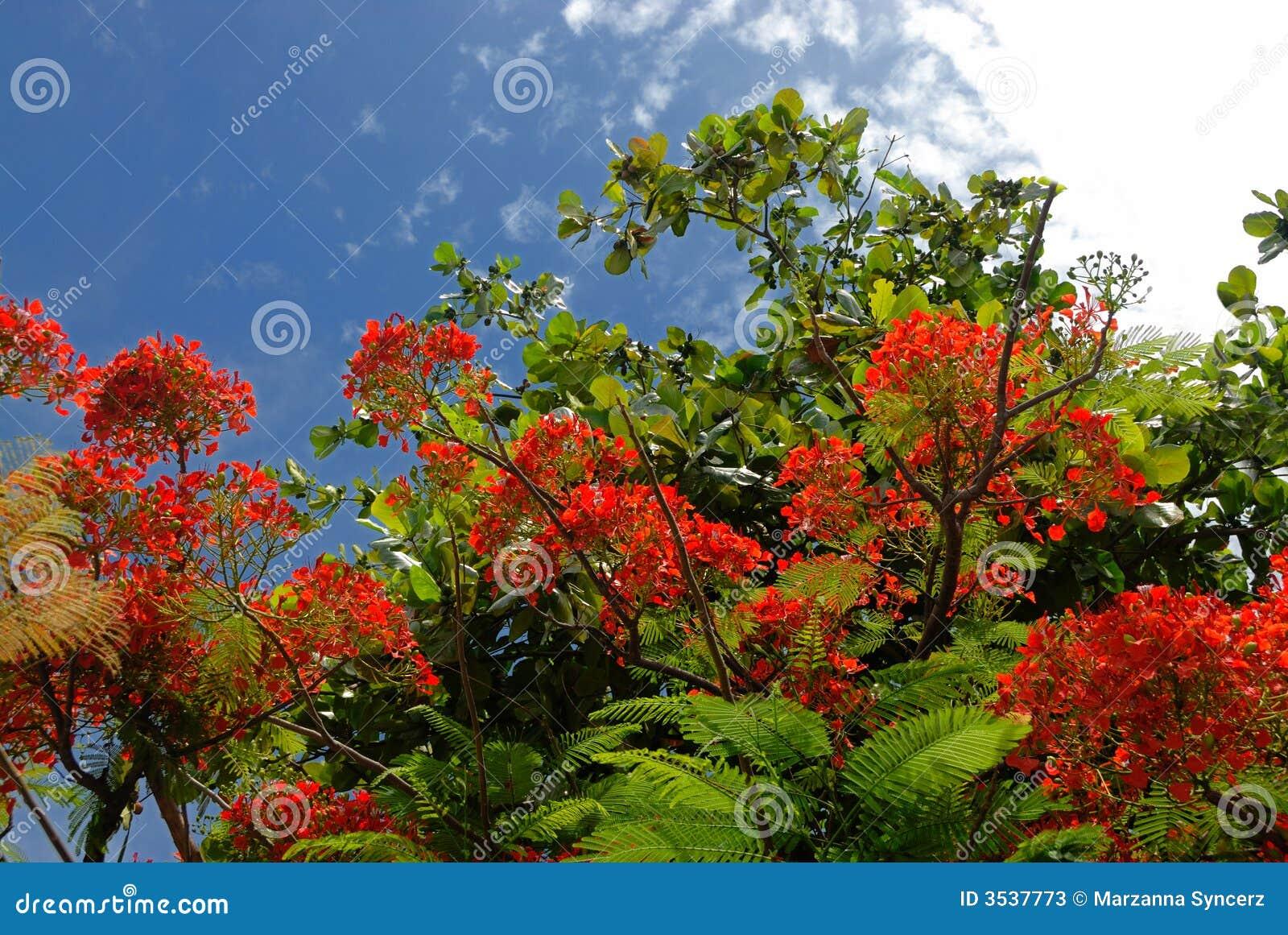Albero con i fiori rossi fotografie stock immagine 3537773 for Albero con fiori blu