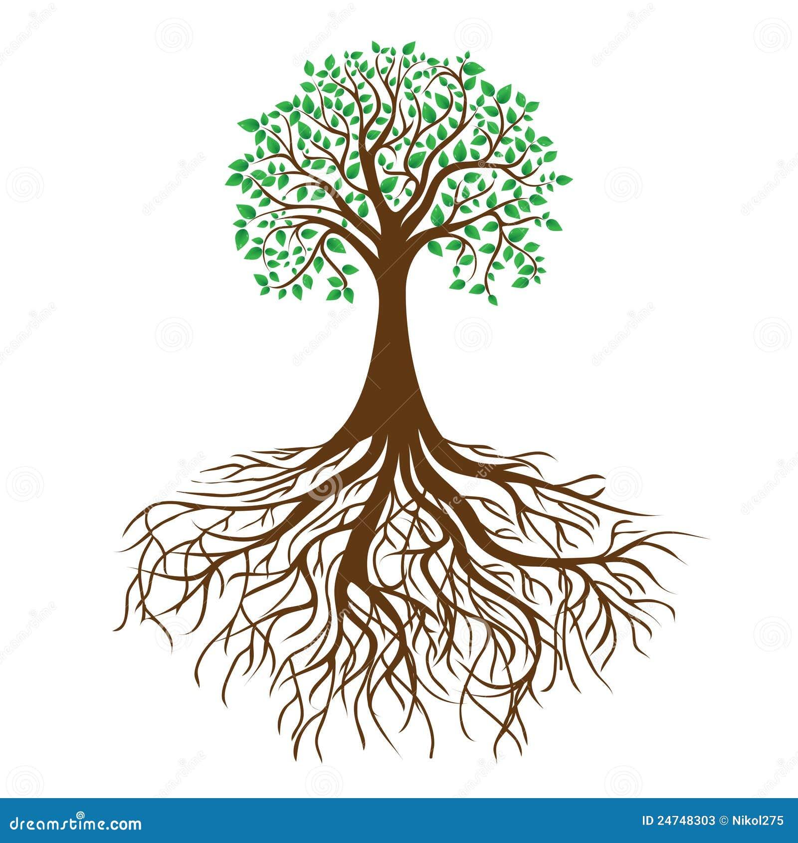 Albero con le radici ed il fogliame denso, vettore