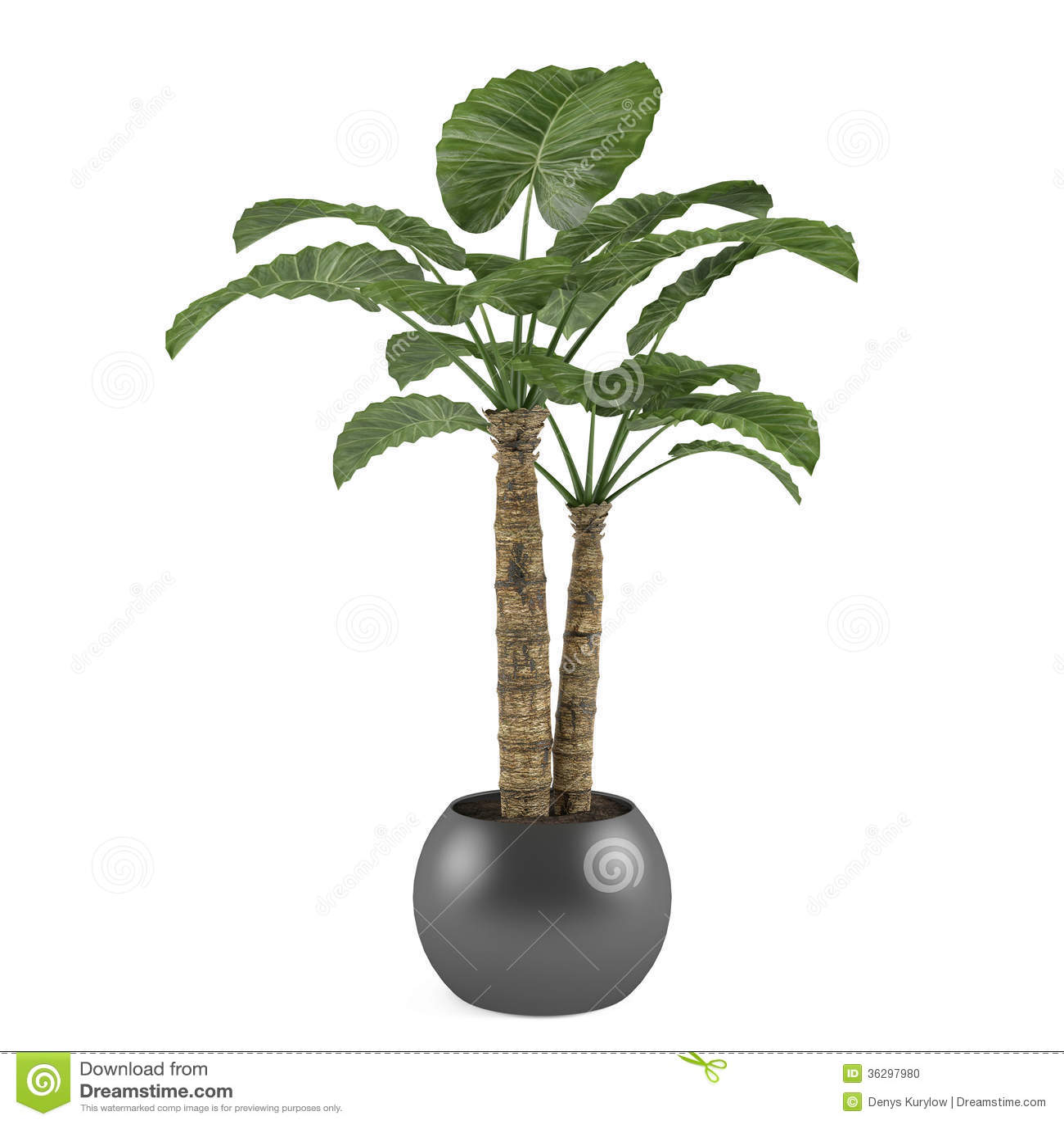 Albero decorativo della pianta della palma nel vaso della for Pianta palma