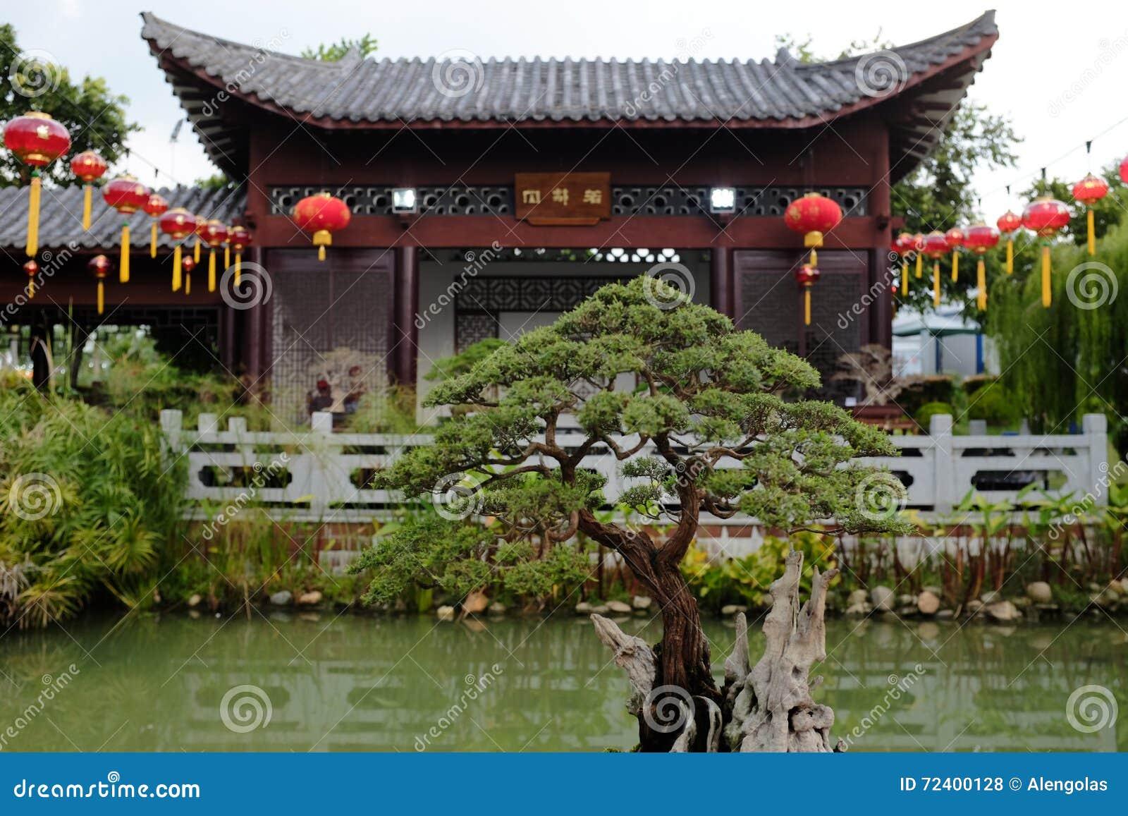 Albero dei bonsai in giardino cinese fotografia stock for Giardino cinese