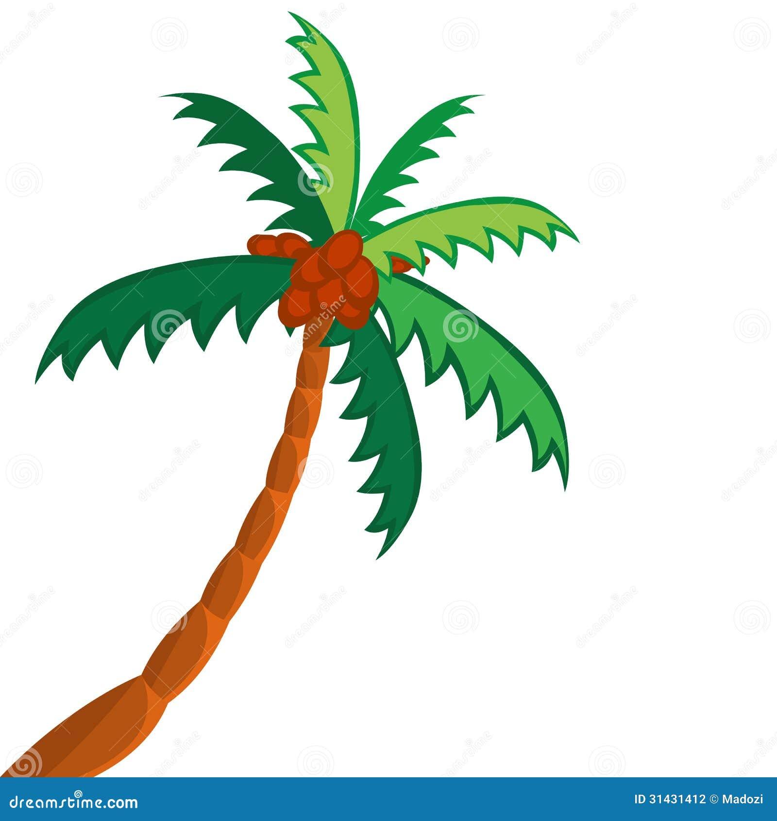 Albero del cocco