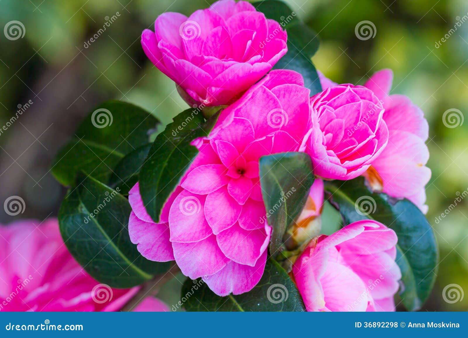 Download Albero del fiore fotografia stock. Immagine di giardinaggio - 36892298