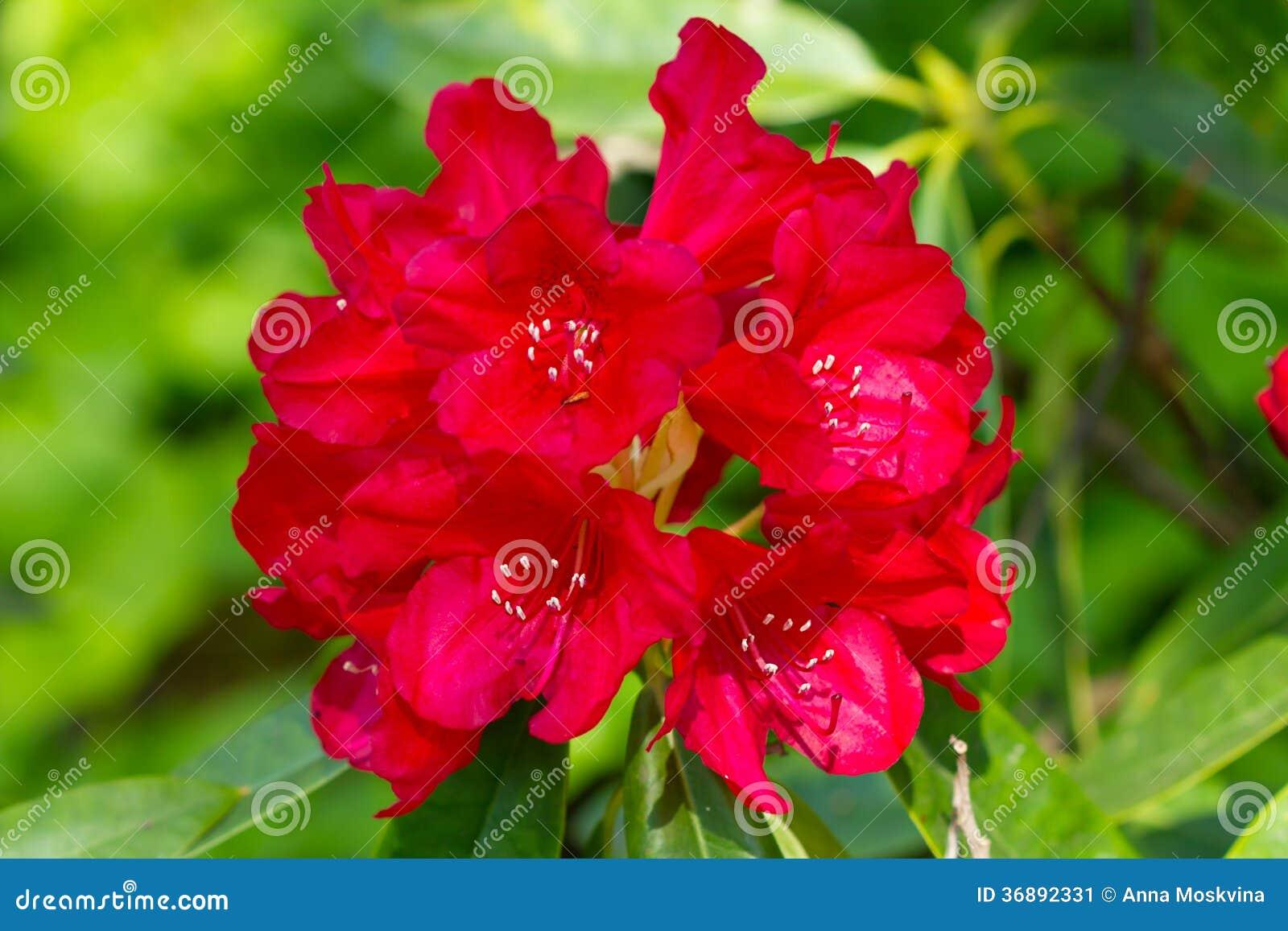 Download Albero del fiore immagine stock. Immagine di pink, nave - 36892331