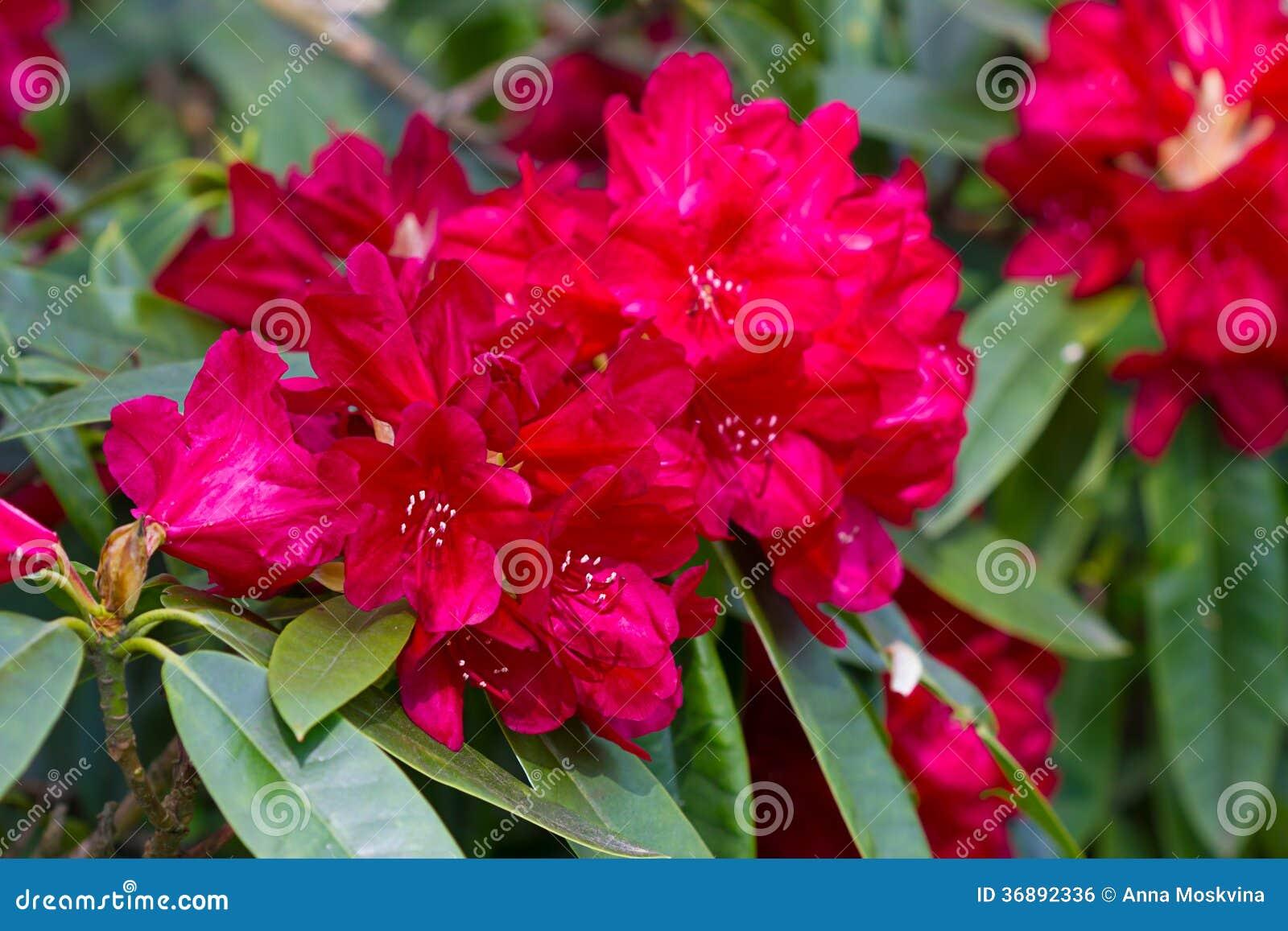 Download Albero del fiore fotografia stock. Immagine di bello - 36892336