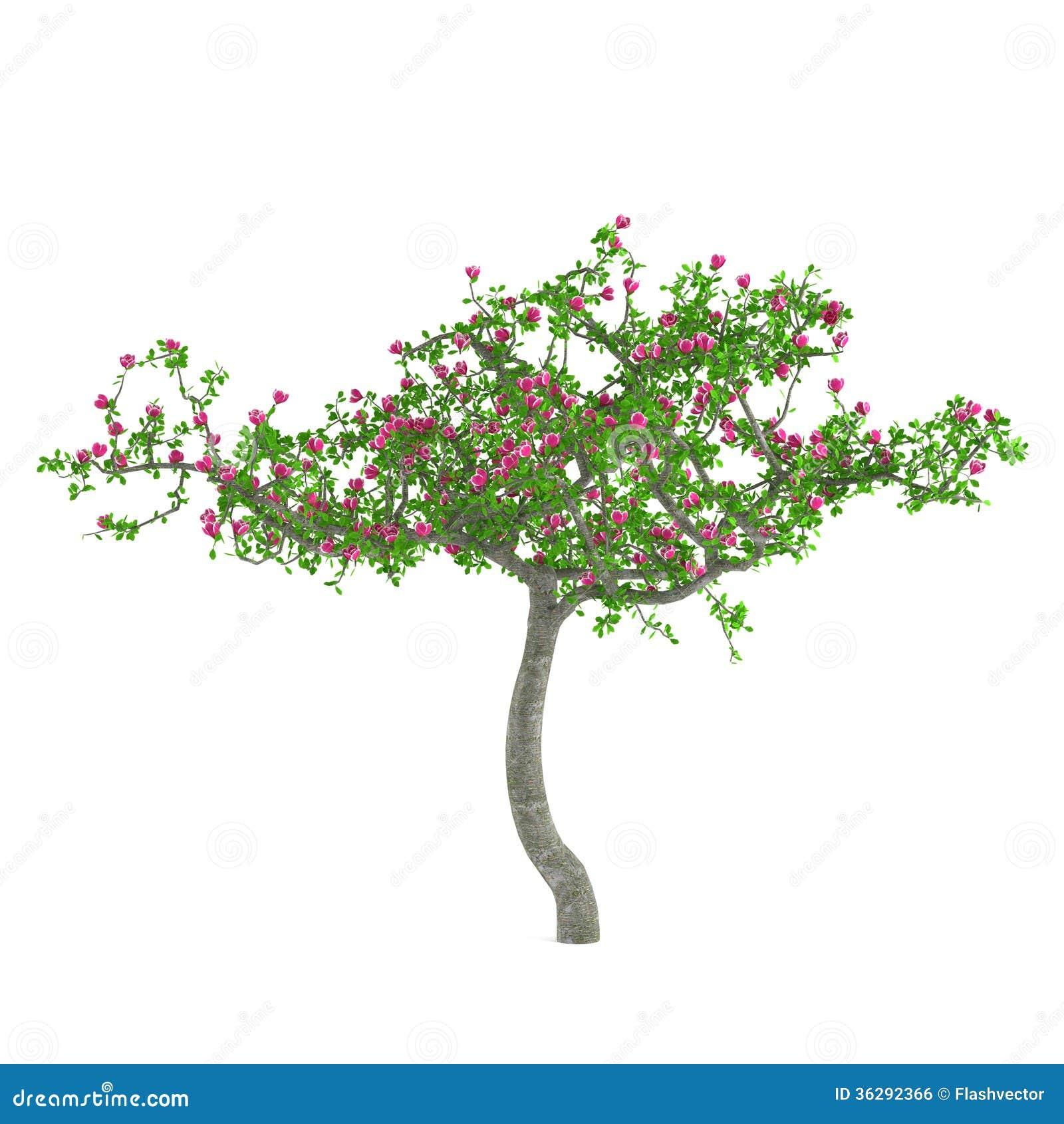 albero del fiore alberi decorativi con i fiori rosa