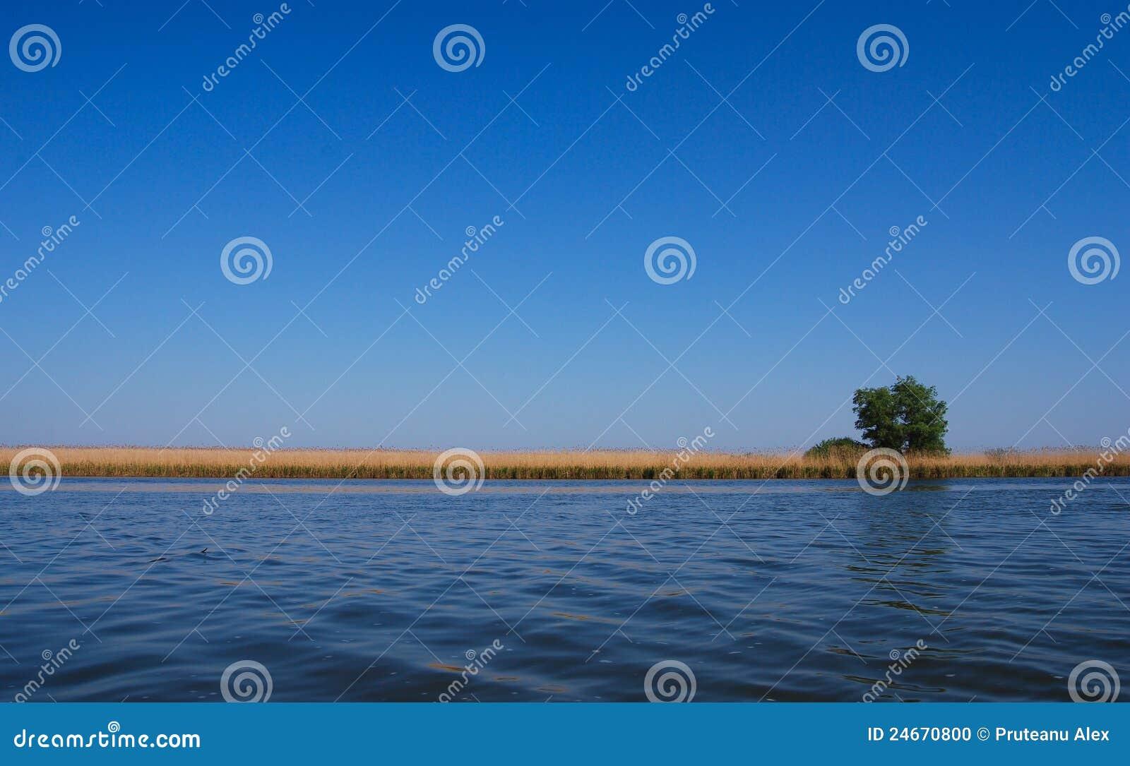 Albero del Solitaire vicino al lago