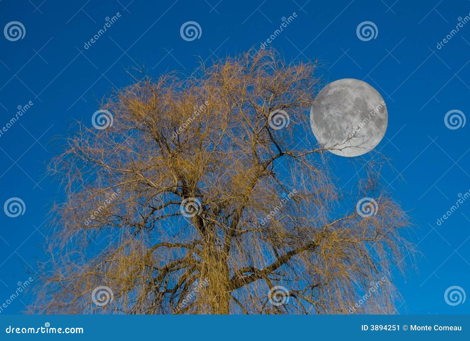 Albero della luna
