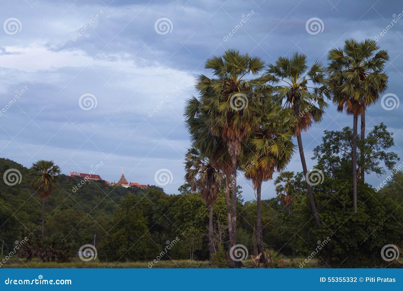 Albero della palma da zucchero a tempo crepuscolare