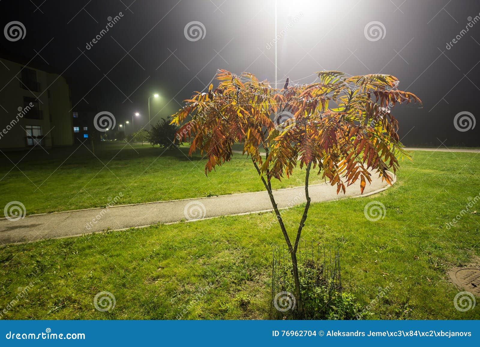 Albero di cenere alla notte con nebbia