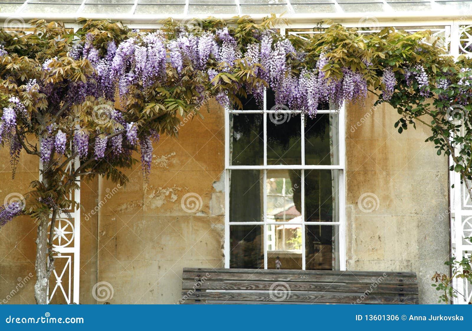 Albero di fioritura sulla facciata della casa di campagna for Colore facciata casa campagna