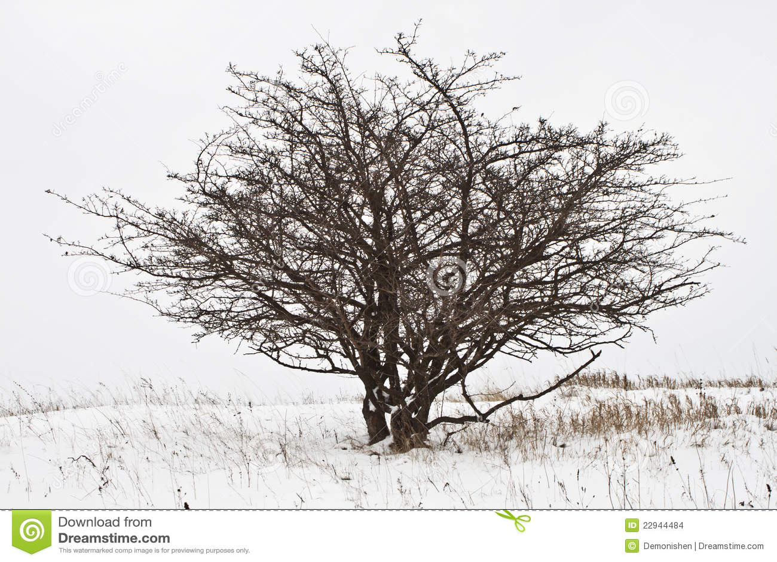 Albero di inverno immagini stock immagine 22944484 - Animali in inverno clipart ...