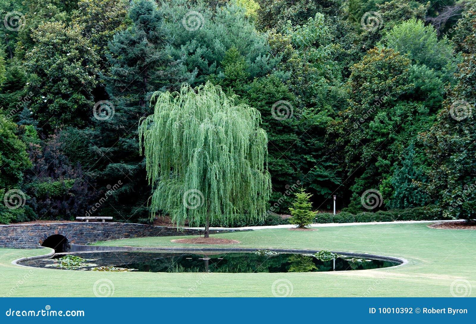 Albero di salice piangente fotografia stock immagine di - Albero da giardino ...