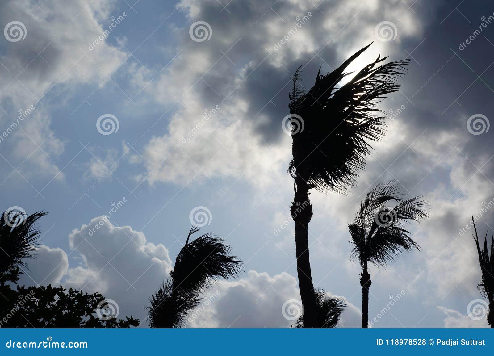 Albero di salto del vento
