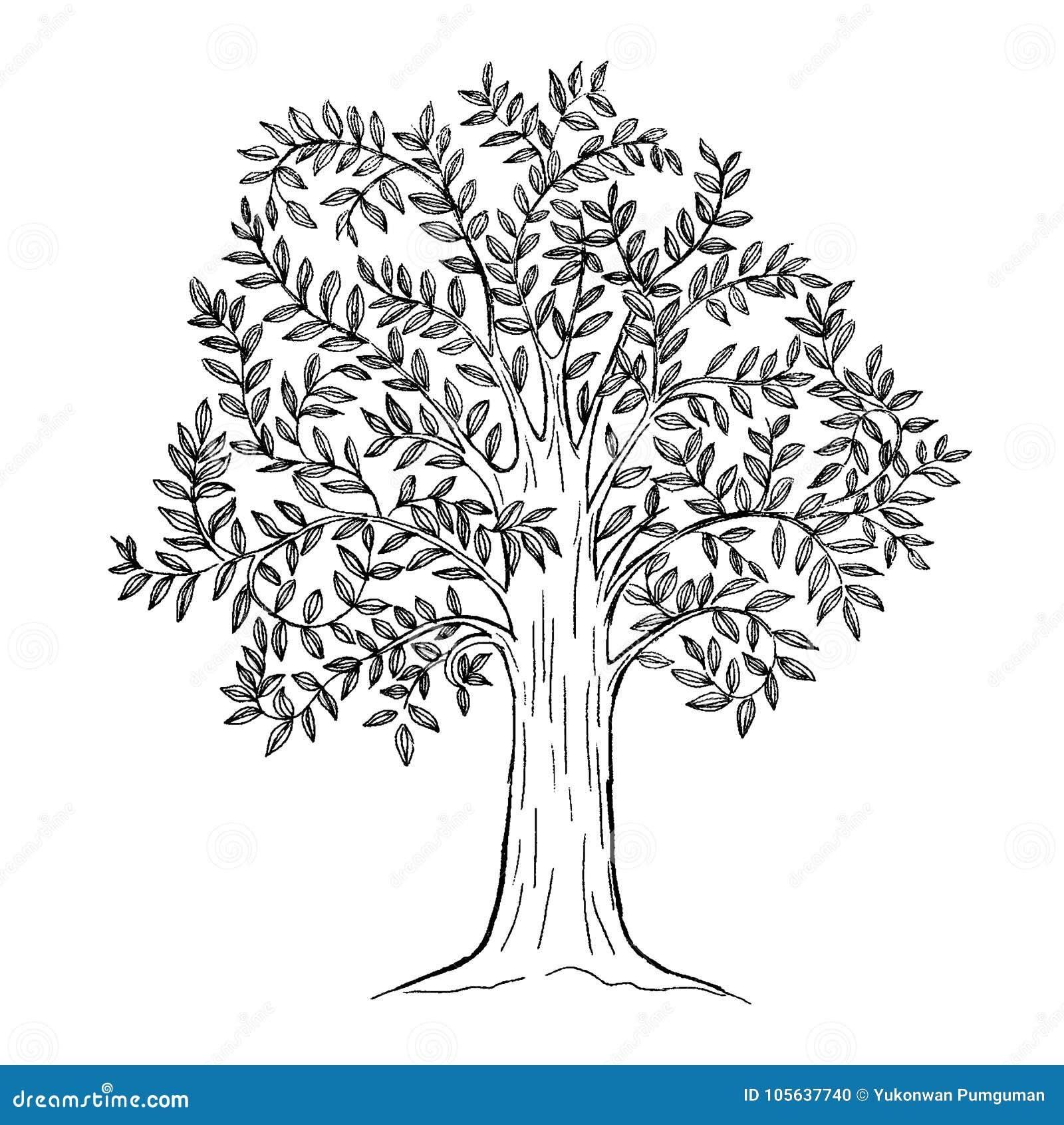 Albero disegnato a mano con le foglie segno naturale for Albero ulivo vettoriale