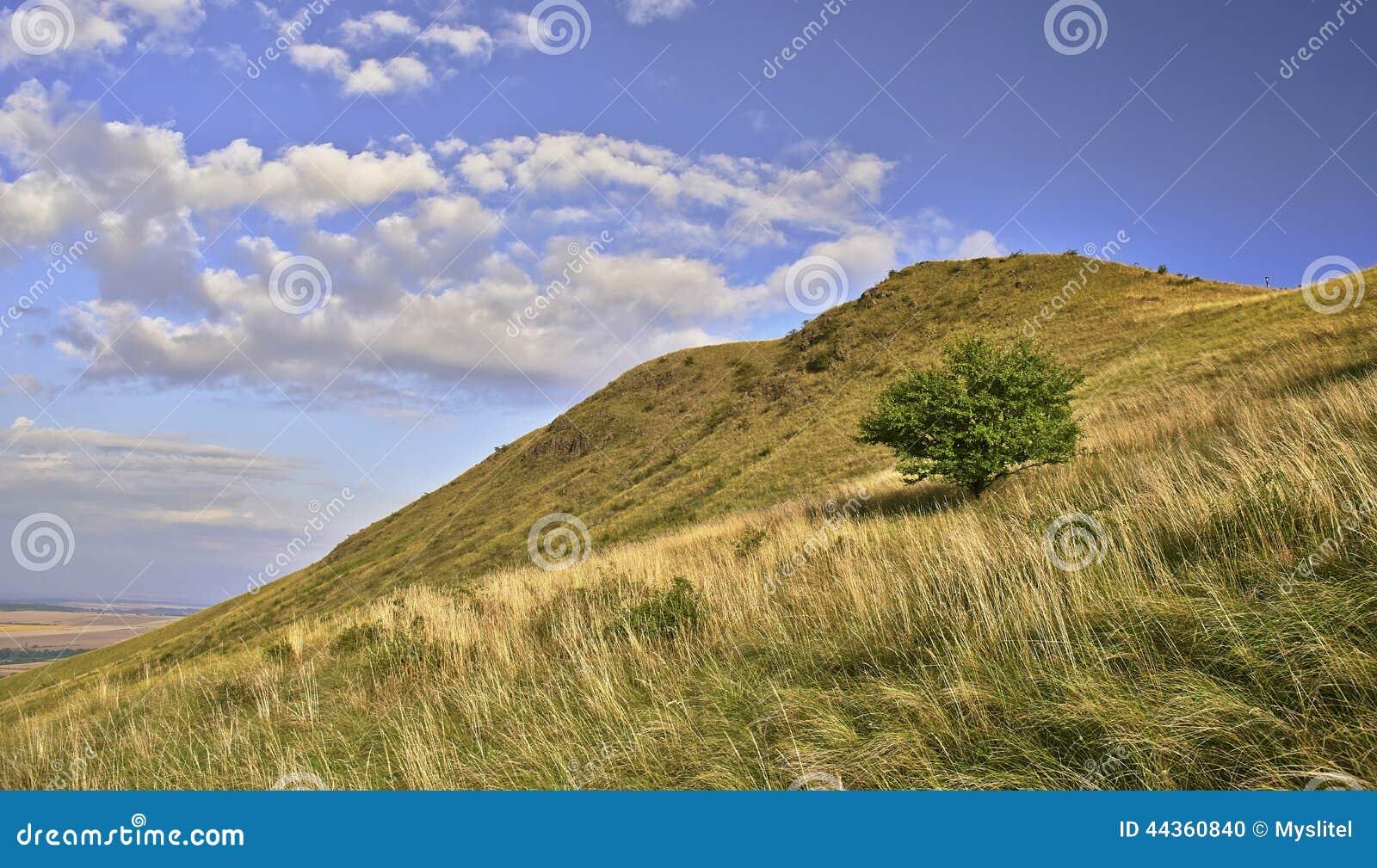Albero e collina
