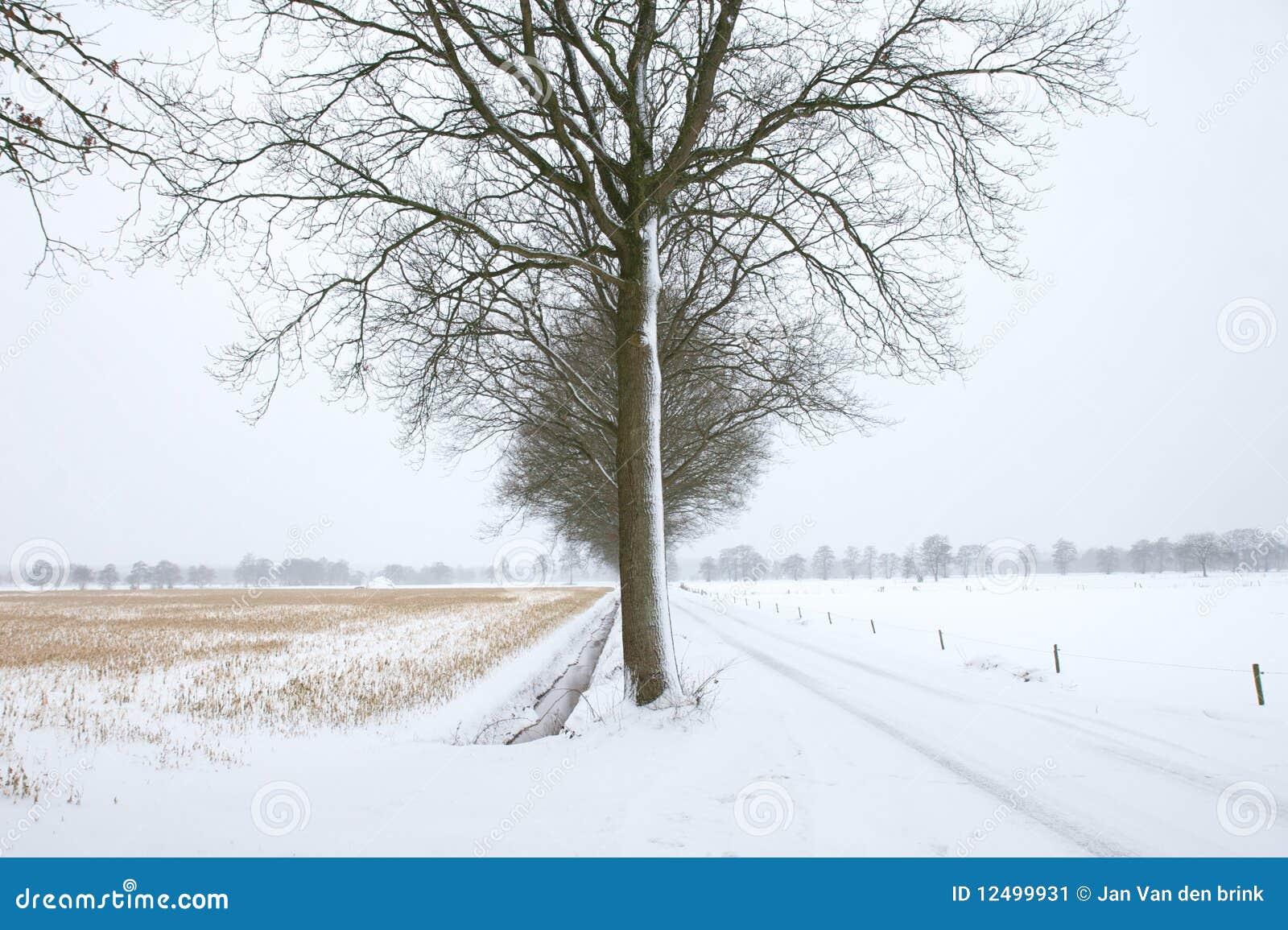 Albero freddo
