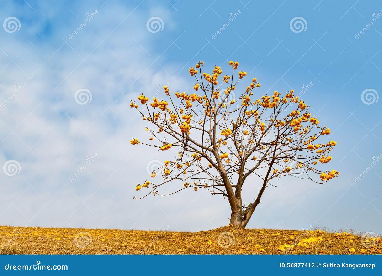 Albero giallo del fiore sulla montagna