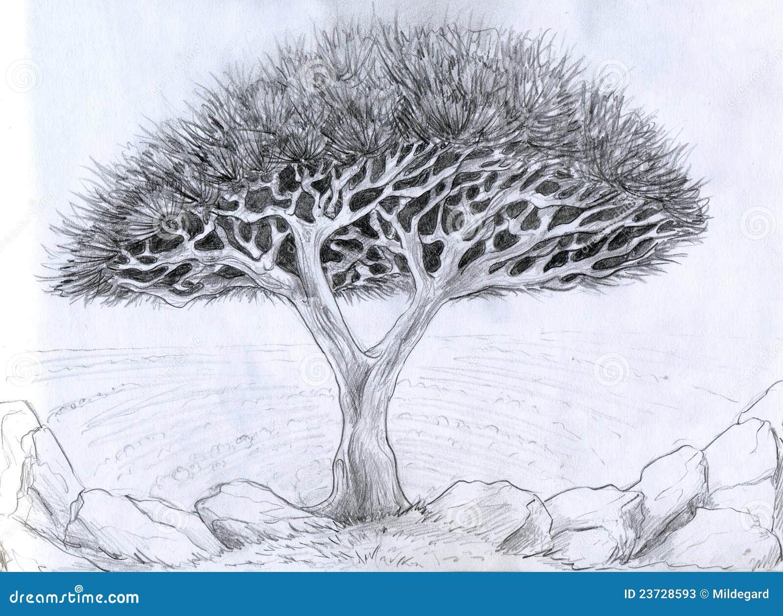Albero insolito illustrazione di matita illustrazione di - Croquis arbre ...