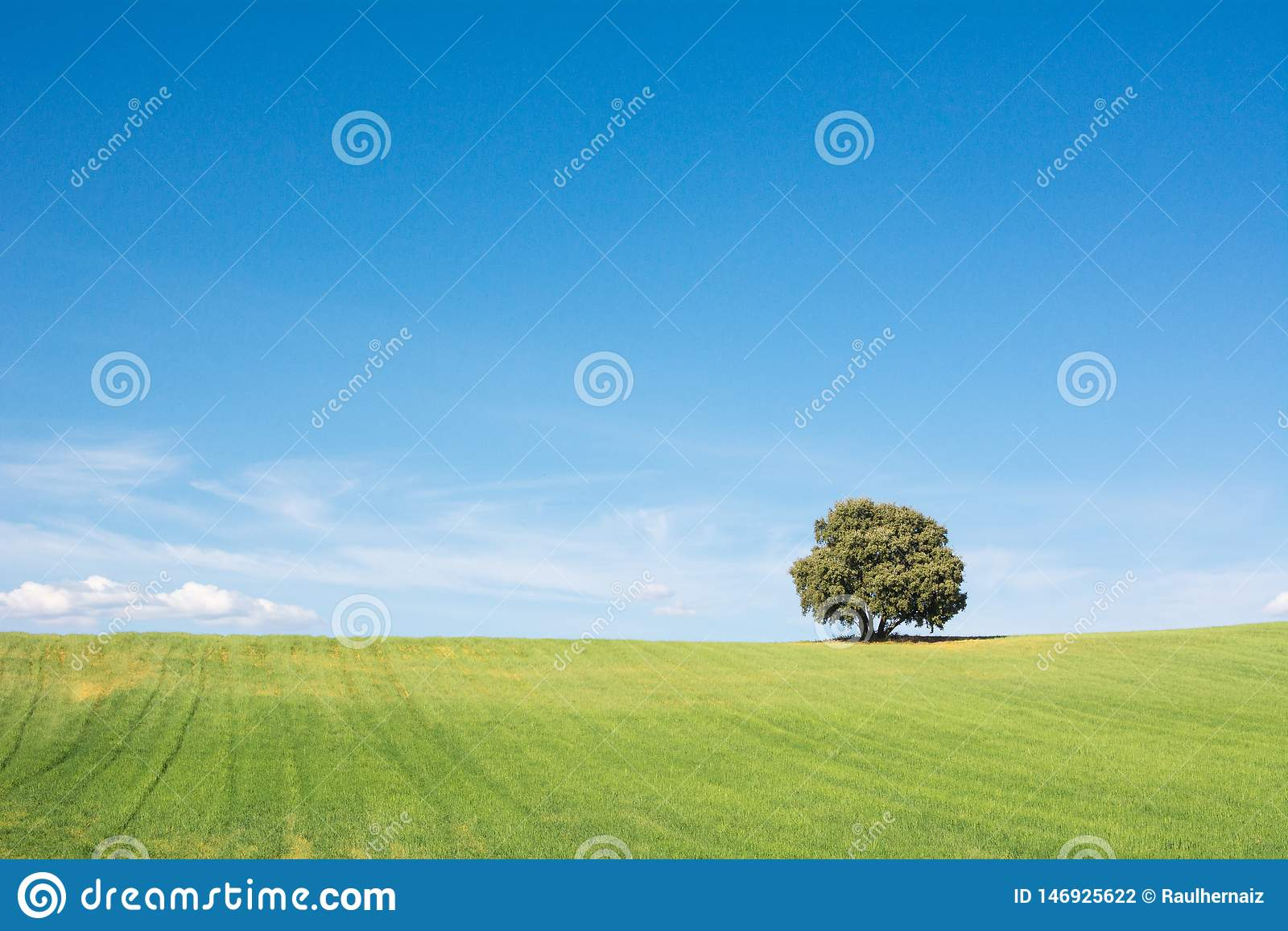 Albero isolato su un campo verde, sotto un cielo blu pulito