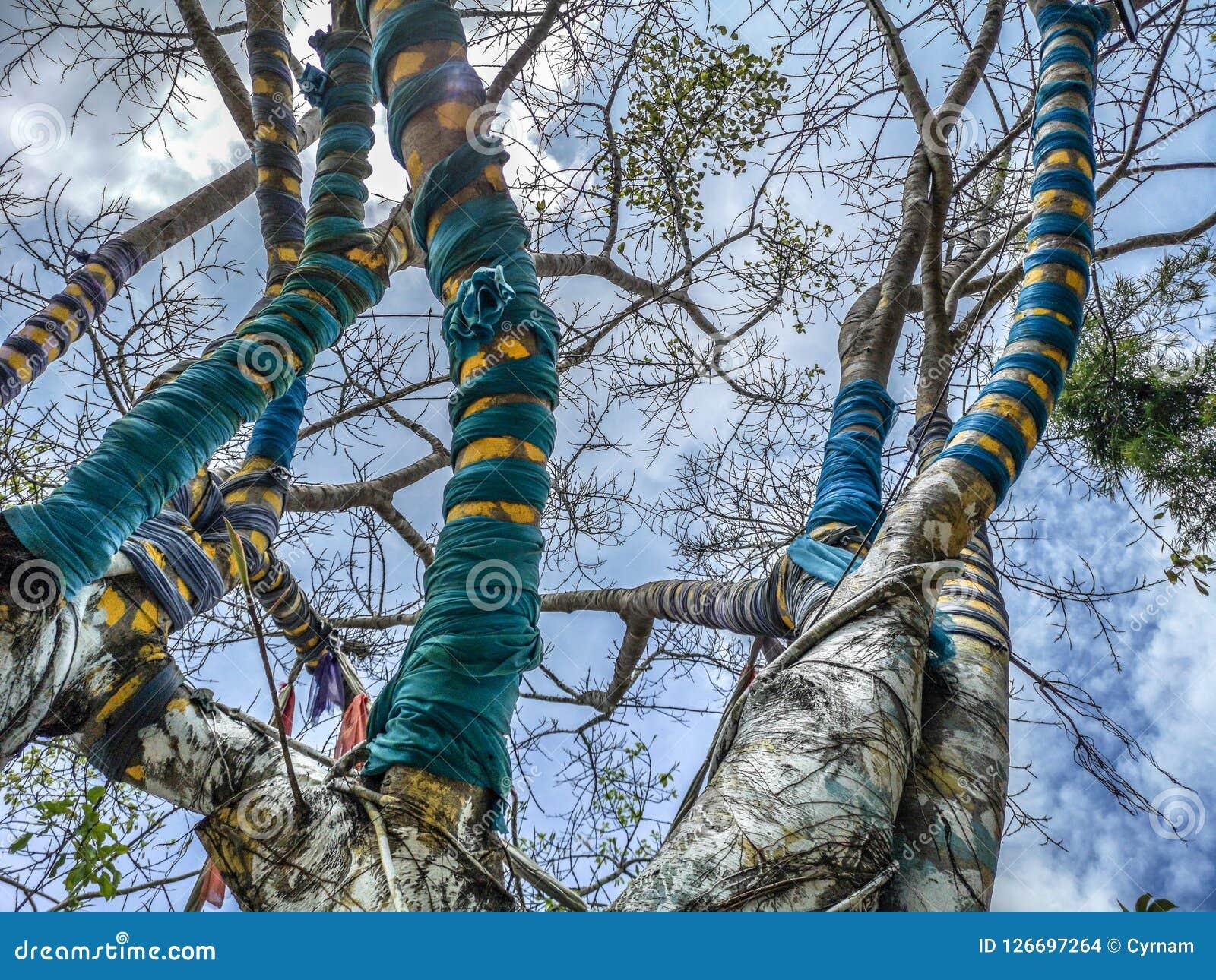 Albero magico di cui i rami sono circondati dai tessuti variopinti nel parco di Nan Riverside Art Gallery