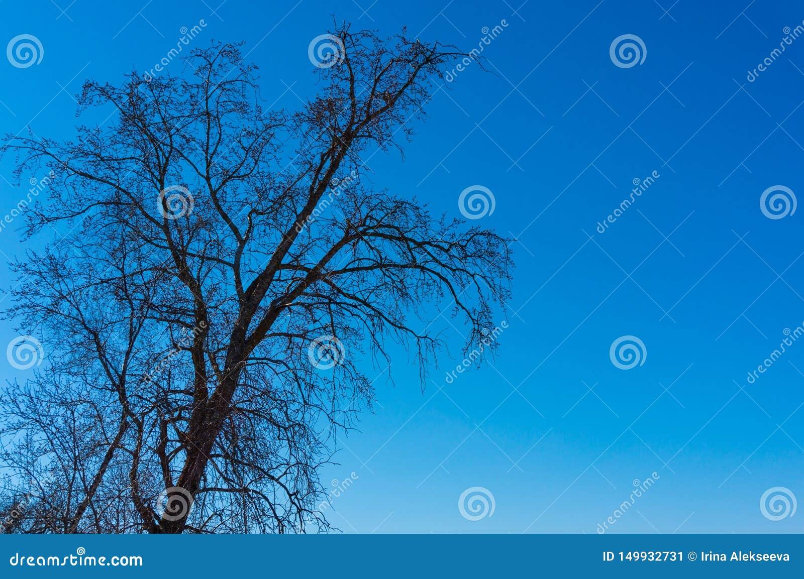 Albero in molla in anticipo contro un cielo blu