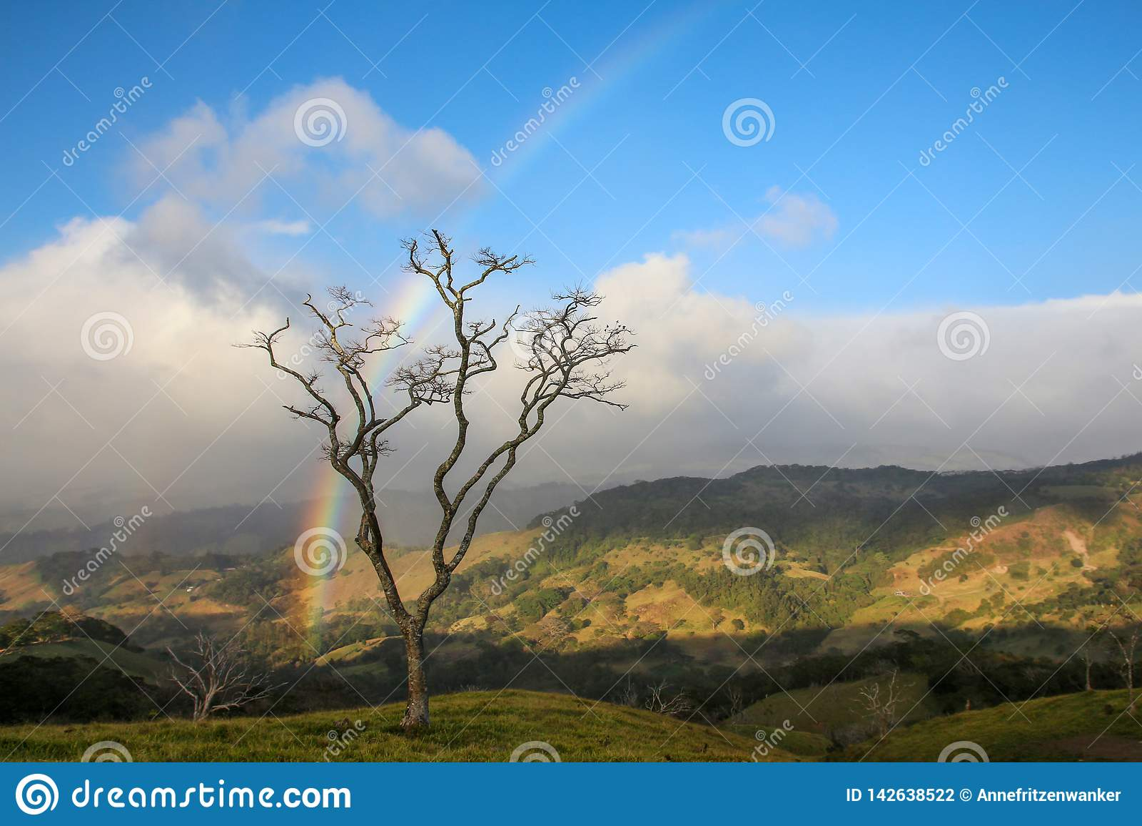 Albero in Monteverde Costa Rica