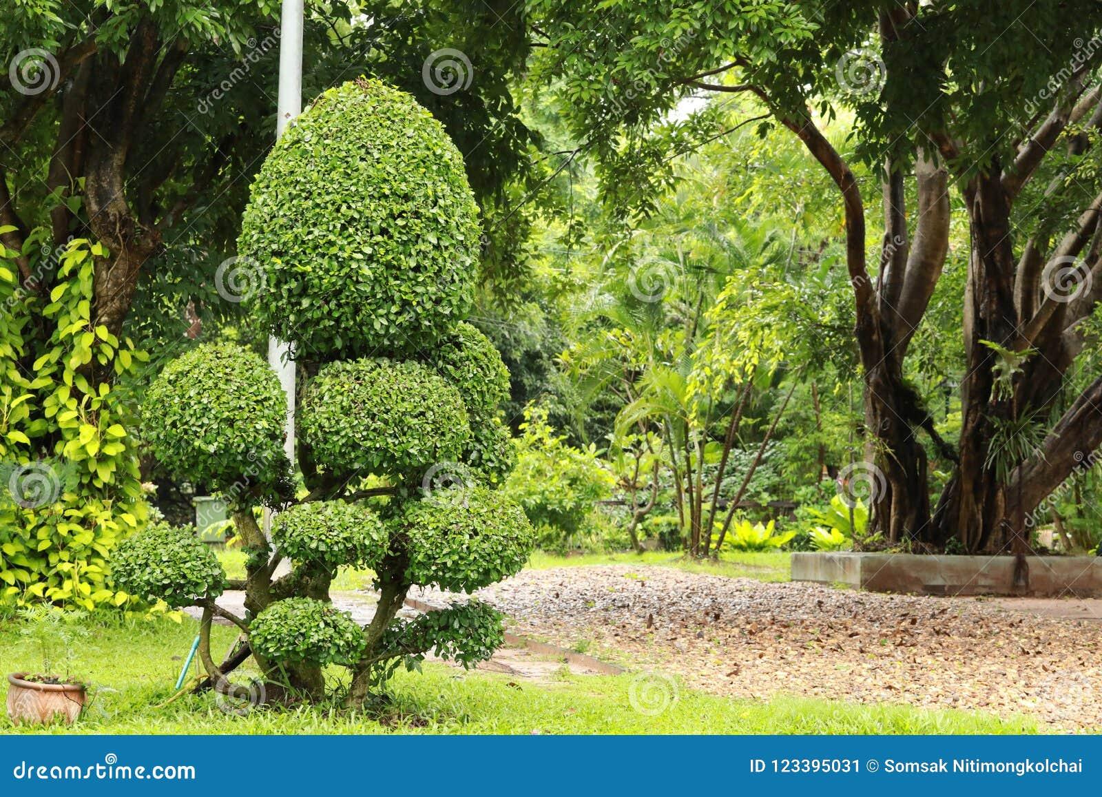 Prezzi Alberi Da Giardino albero nano nel giardino immagine stock. immagine di