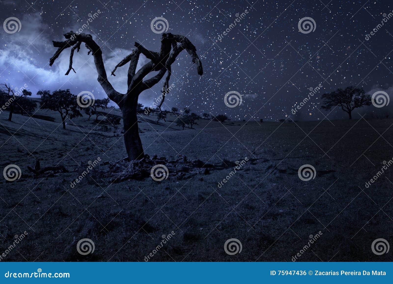Albero nudo illuminato dalla luna