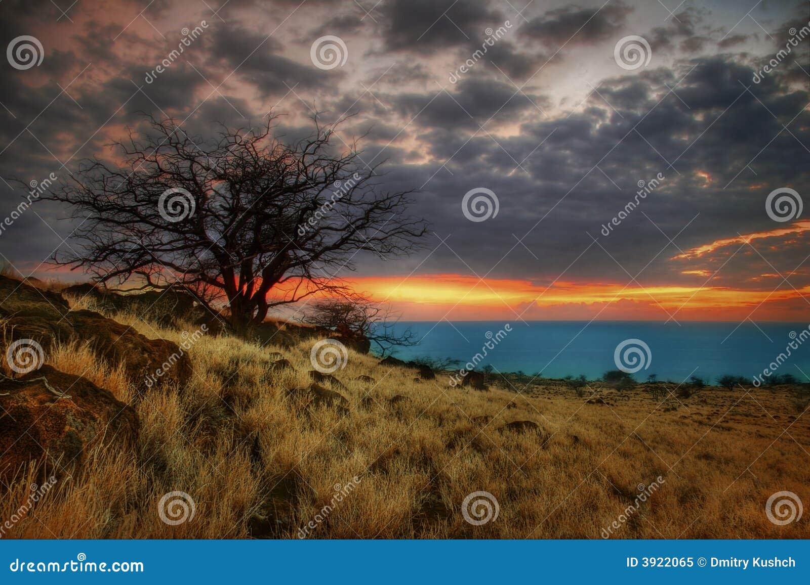 Albero pieno di sole di Hawaii-2