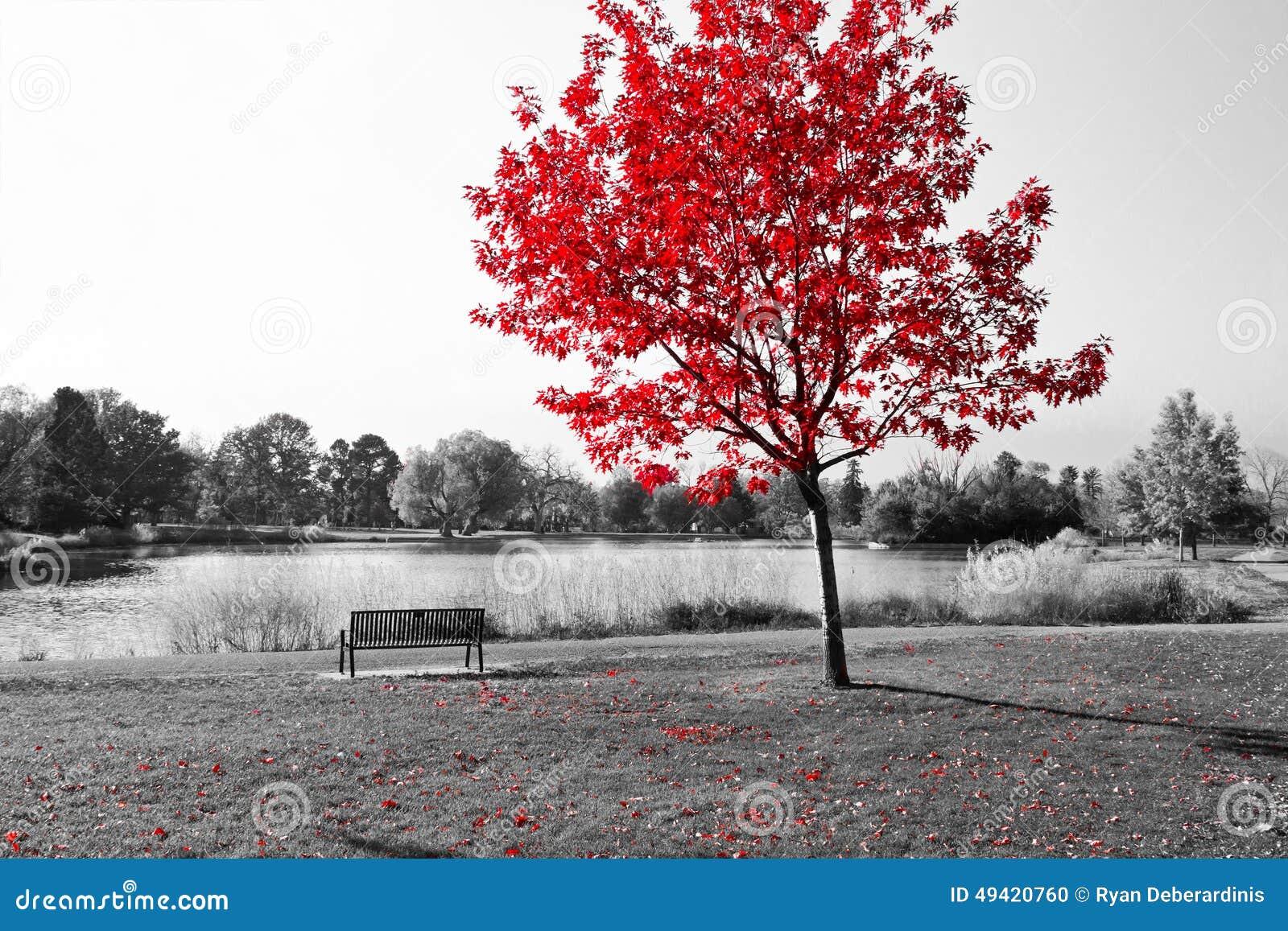 Albero rosso sopra il banco di parco