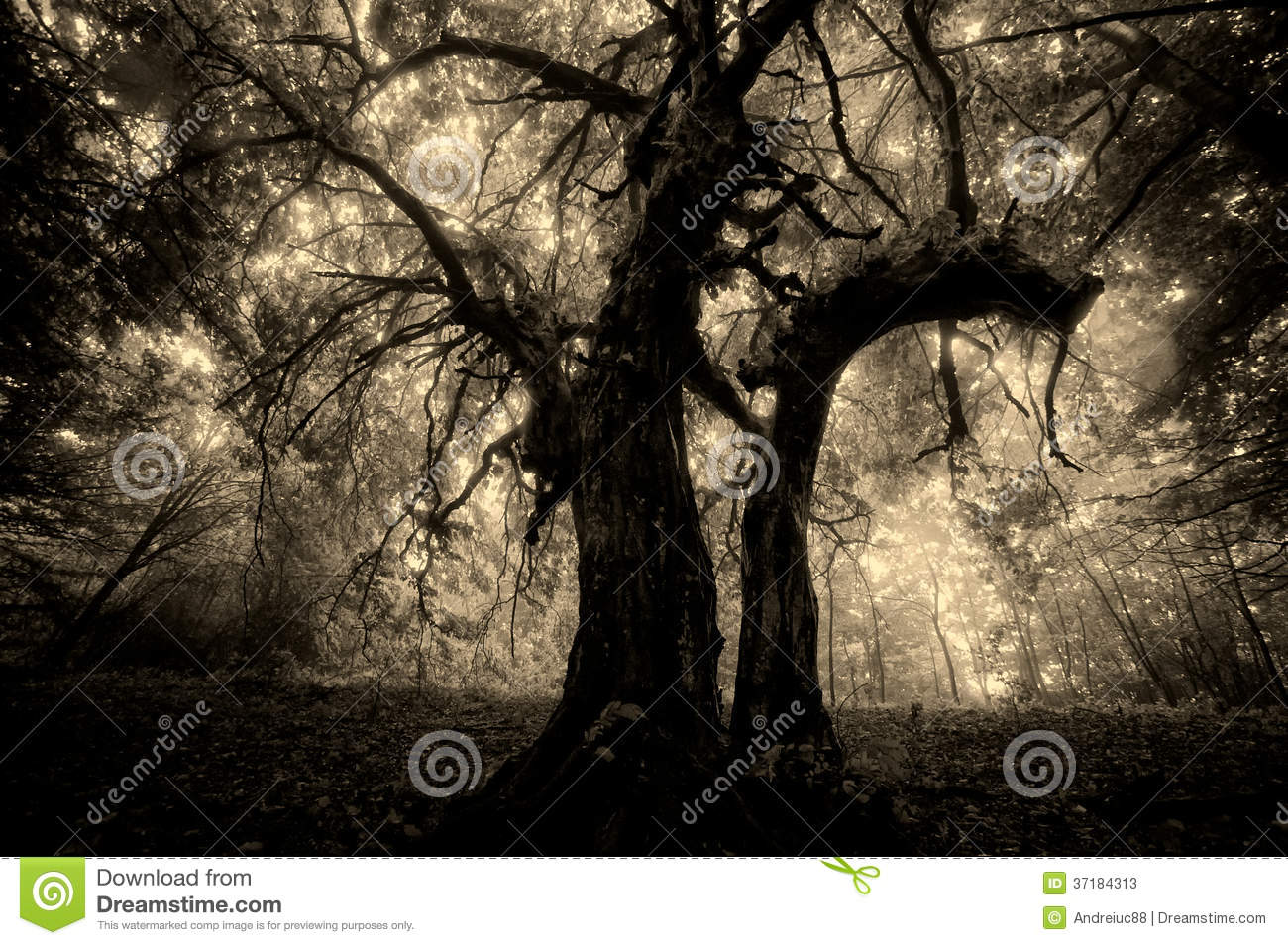dark places forest trees - photo #30