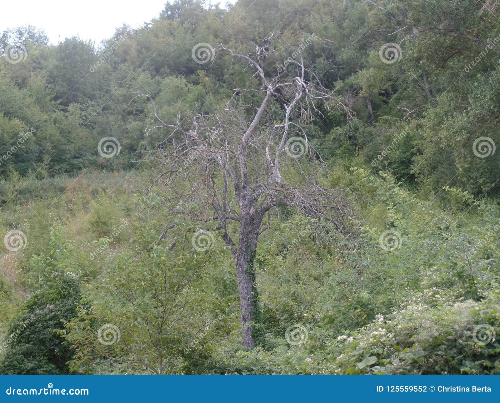 Albero senza foglie nella campagna