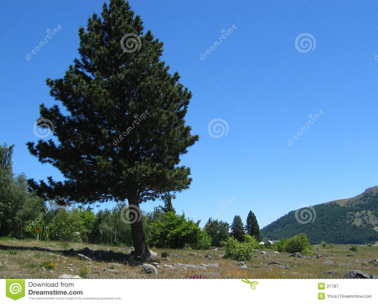 Download Albero solo immagine stock. Immagine di cespugli, distanza - 21787
